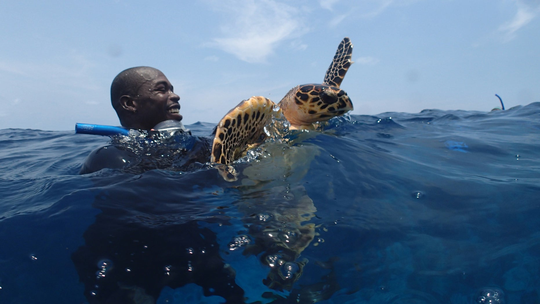 : A marine scientist holding a hawksbill sea turtle.
