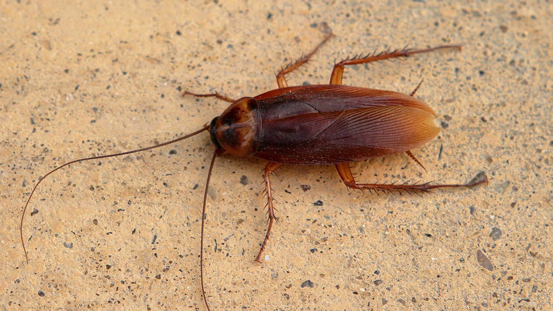 Roaches on a plane! Over 100 of the insects were discovered on two planes at a Chinese airport