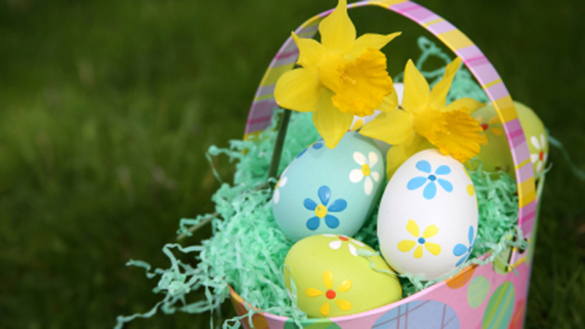 Colorful Easter eggs in basket with daffodils.