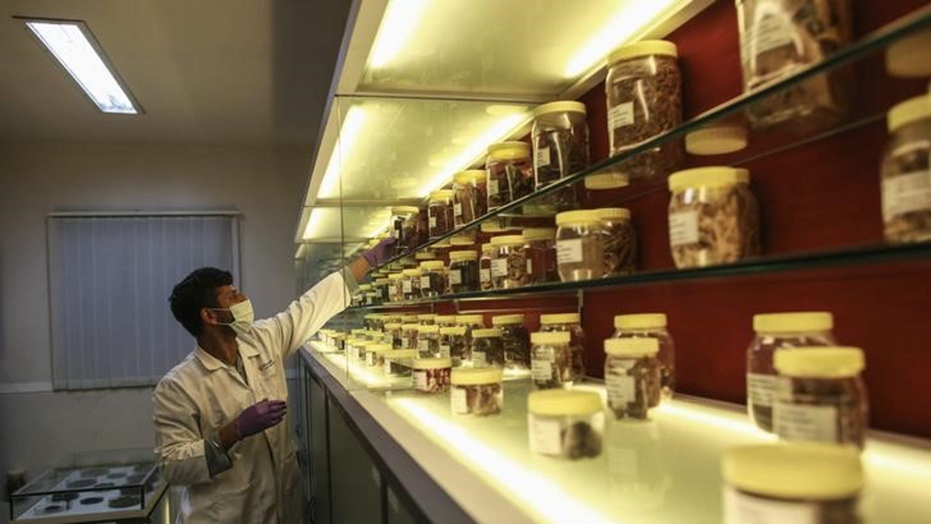 An employee looks for a herbal medicine sample inside a laboratory at Piramal's Research Centre in Mumbai August 11, 2014. REUTERS/Danish Siddiqui