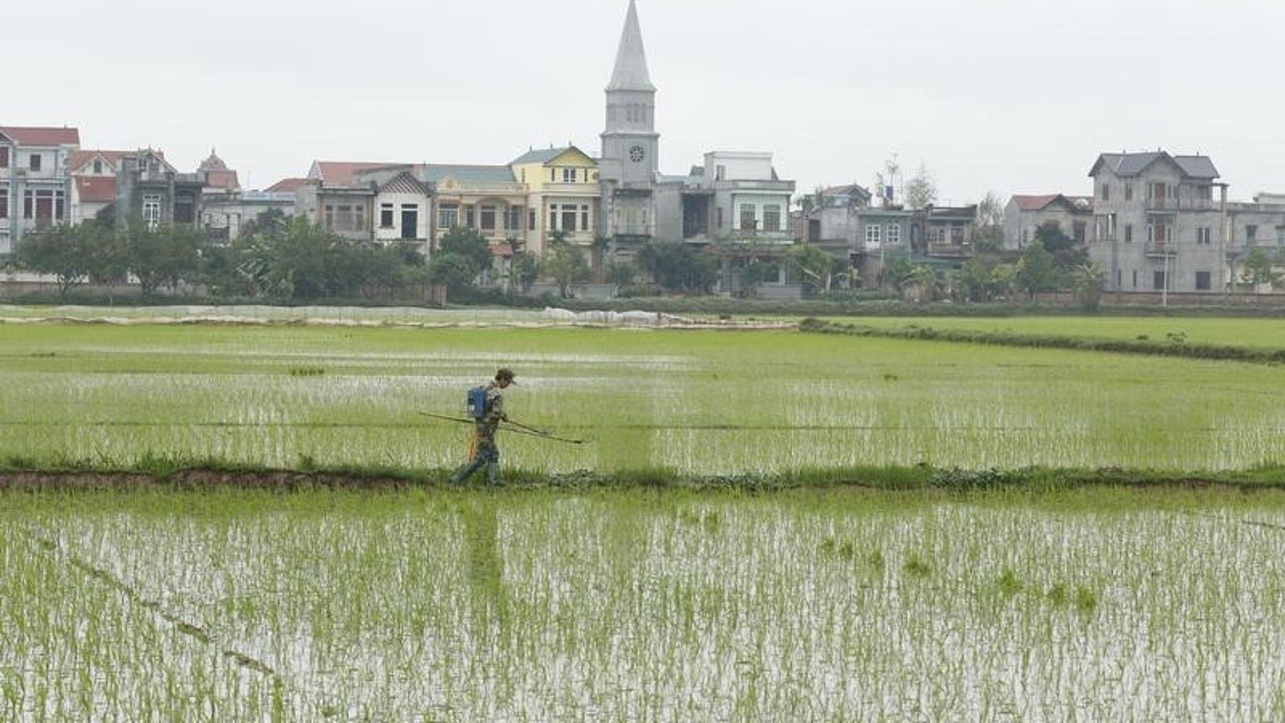 A farmer walks on a paddy field in Phat Tich village, outside Hanoi