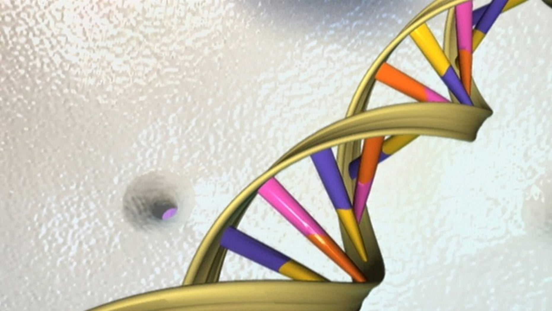 A file photo of a DNA double helix in an undated artist's illustration released by the National Human Genome Research Institute to Reuters