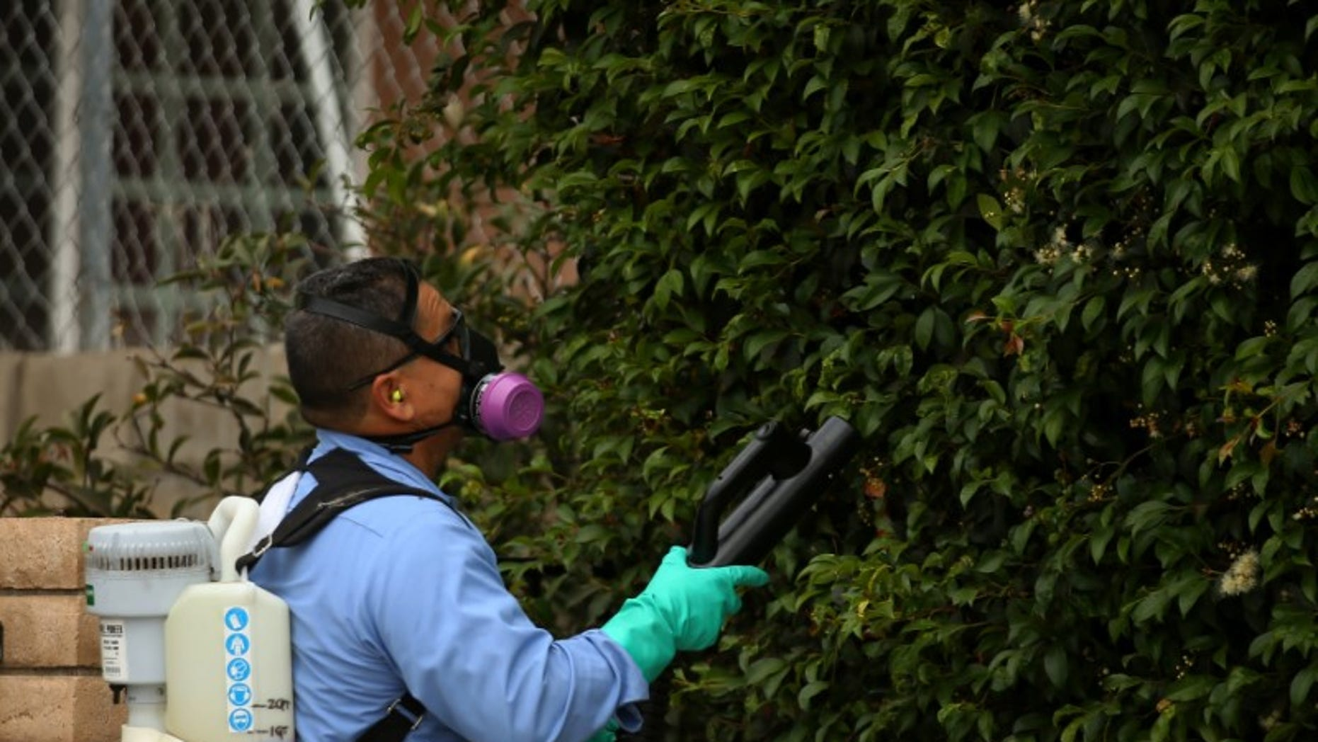 A county vector control member hand-sprays a neighborhood for adult Aedes mosquitoes after a travel-related case of Zika was confirmed in this area of San Diego