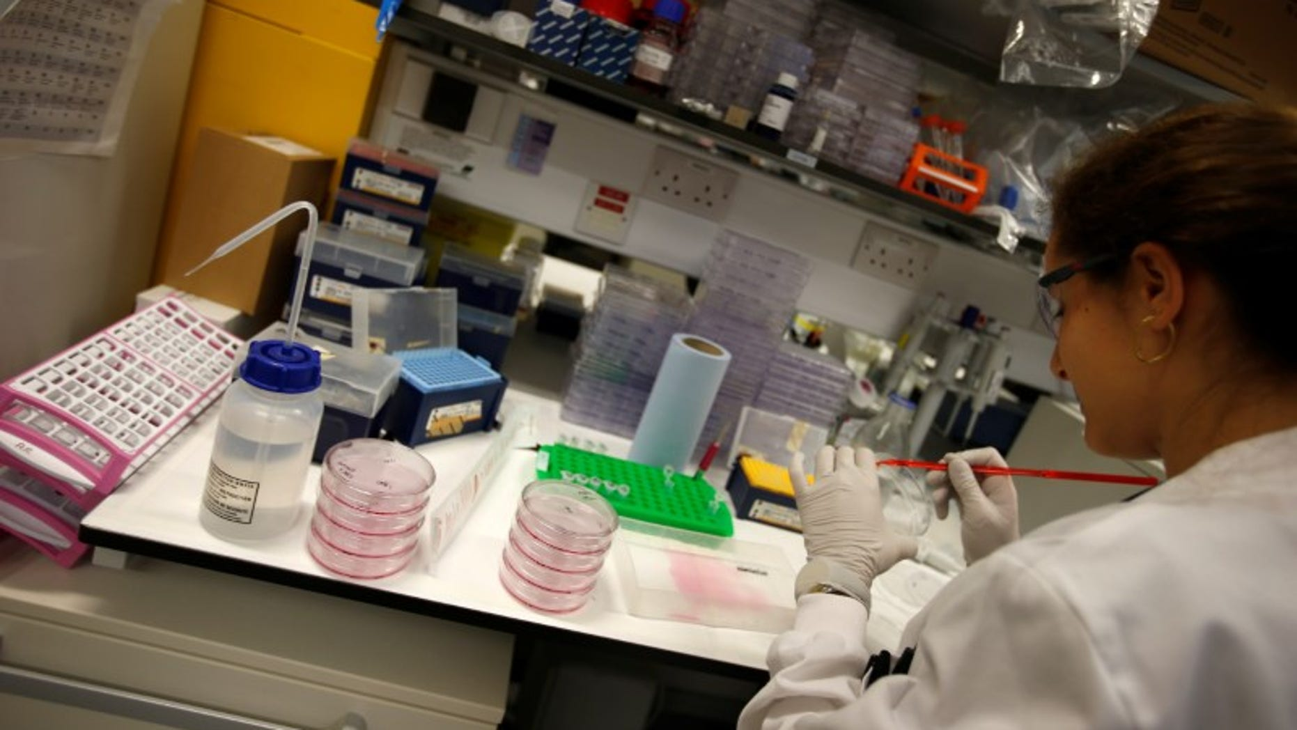 A scientist working in cancer research laboratories at the Old Road Campus research building at Oxford University, in Oxford