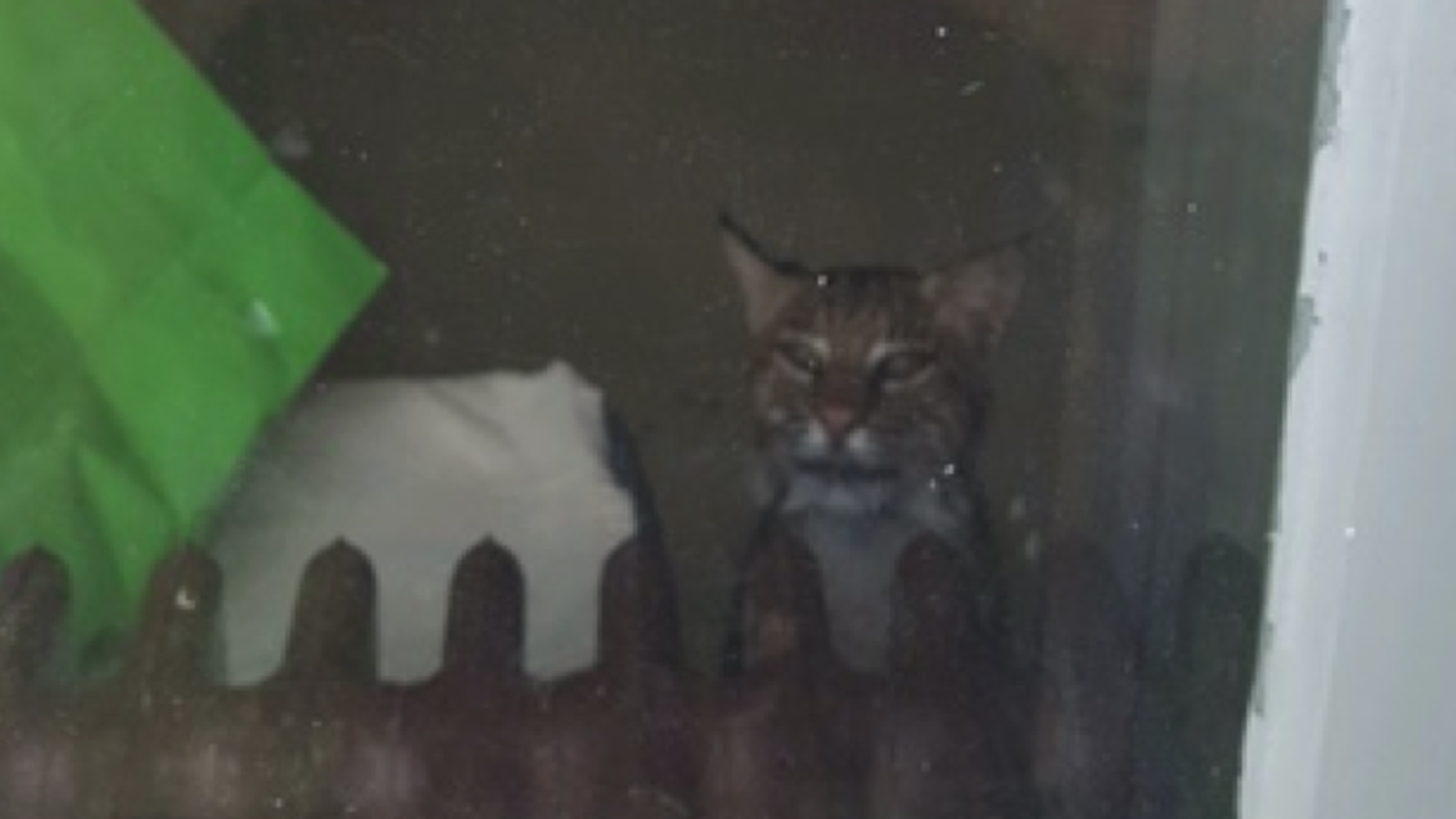 A bobcat trapped a mother and two children inside their home bathroom
