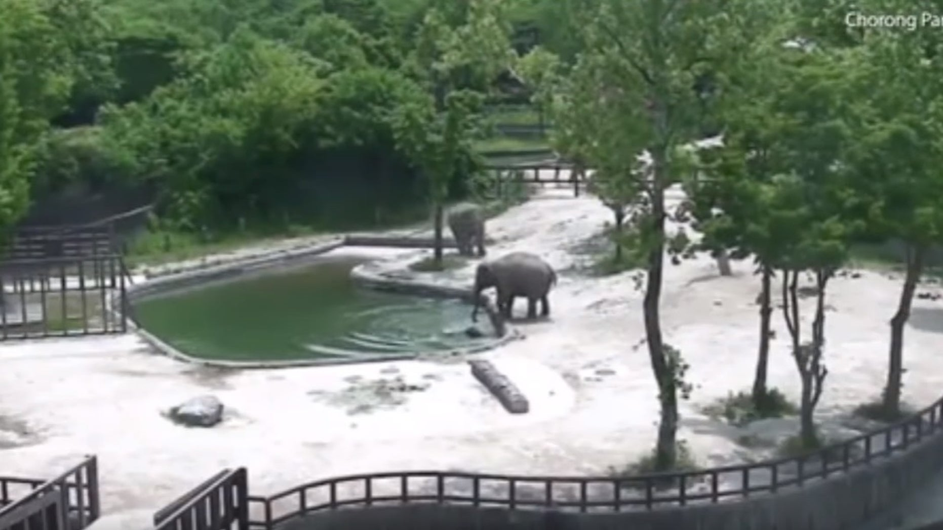The adult elephants worked together to rescue the drowning baby.