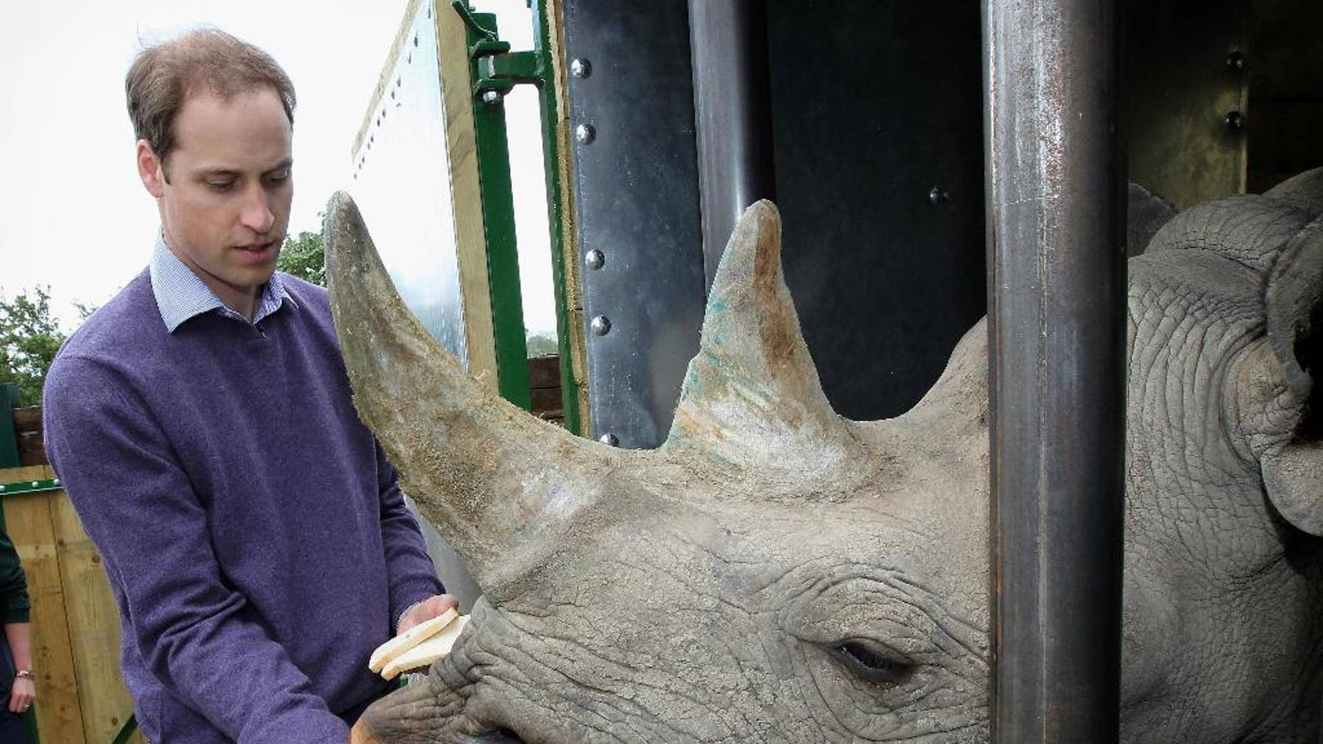 FILE - In this Wednesday June 6, 2012 file photo Britain's Prince William feeds a black rhino called Zawadi as he visits Port Lympne Wild Animal Park in Port Lympne, southern England. The Aspinall Foundation said Sunday Oct. 9, 2016, two critically endangered eastern black rhinos bred in captivity in England have given birth in the wild in Africa. (Chris Jackson/Pool, File)