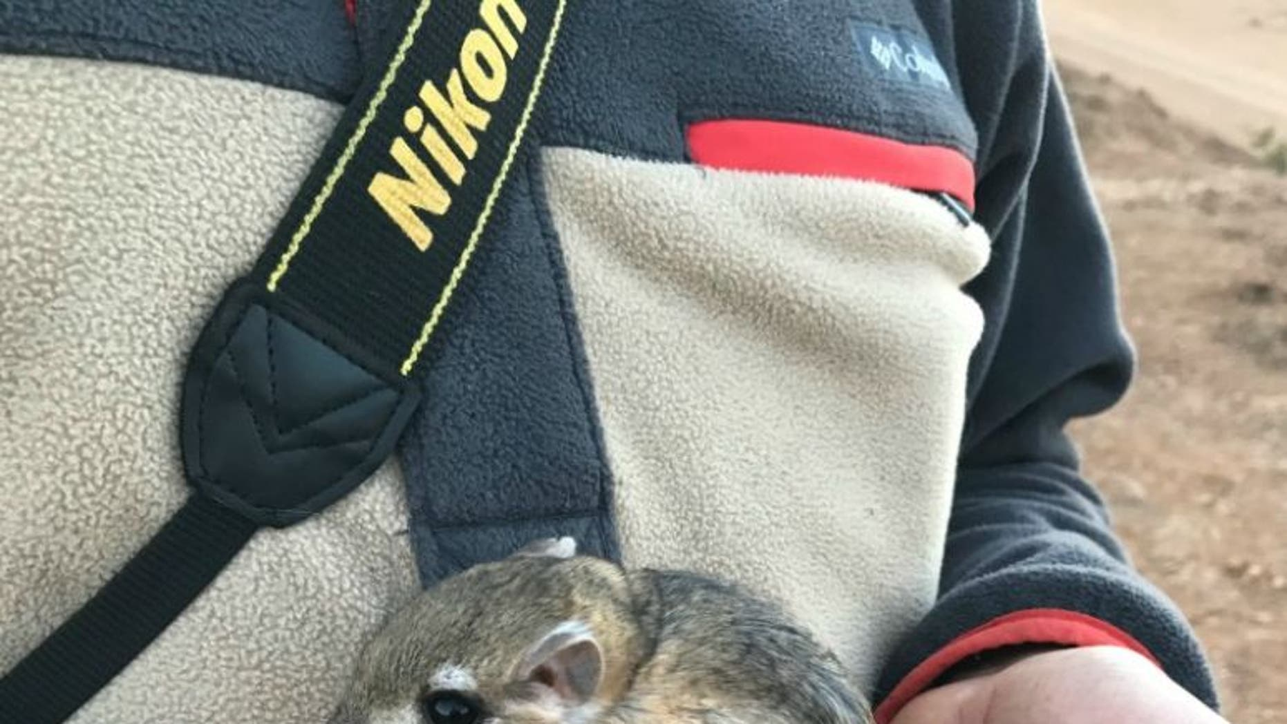 The San Quintin kangaroo rat, which was last spotted in 1986, was recently discovered by researchers in Baja California.