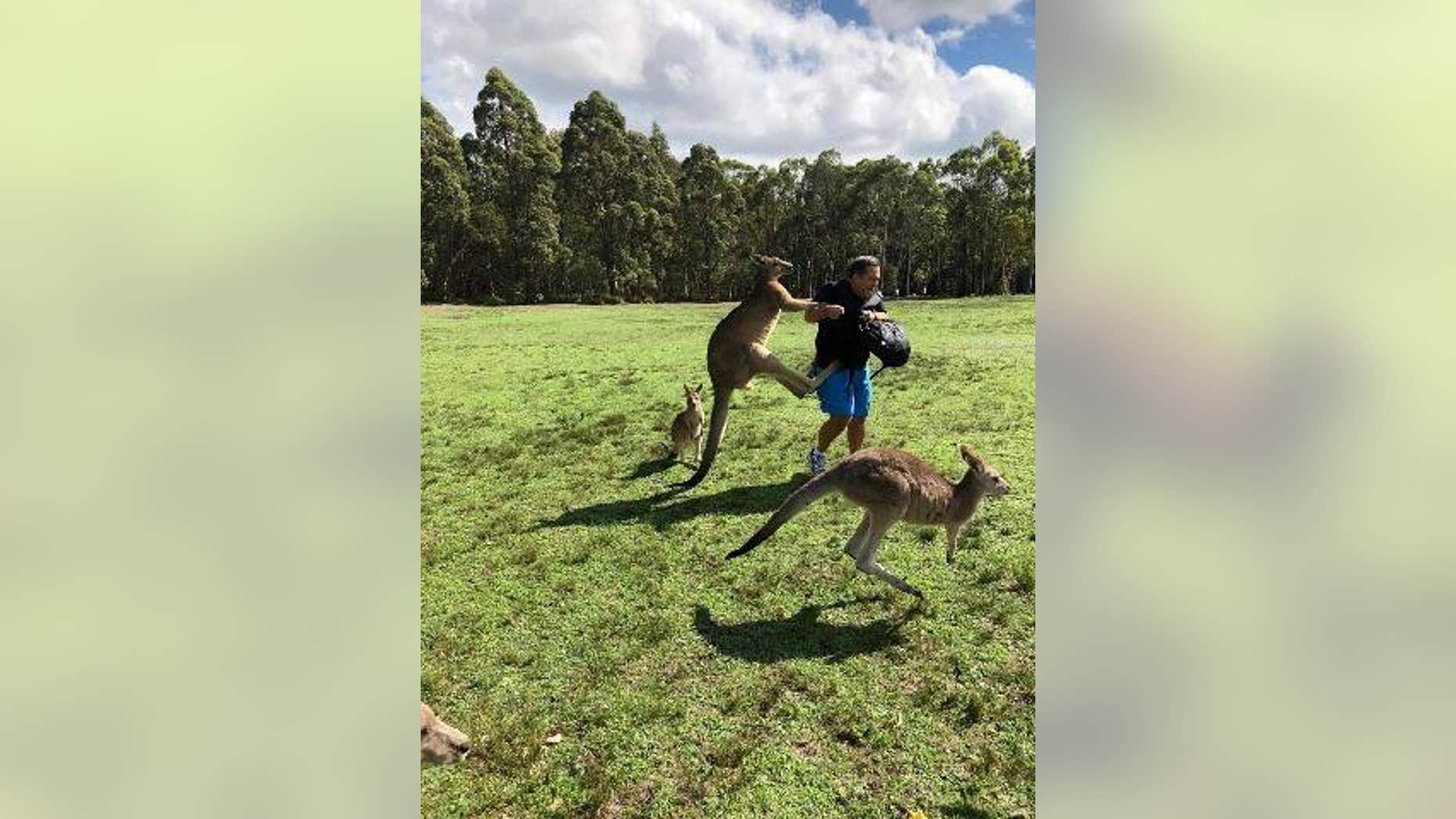 Tourists are being warned against feeding kangaroos after an uptick in attacks have been reported.