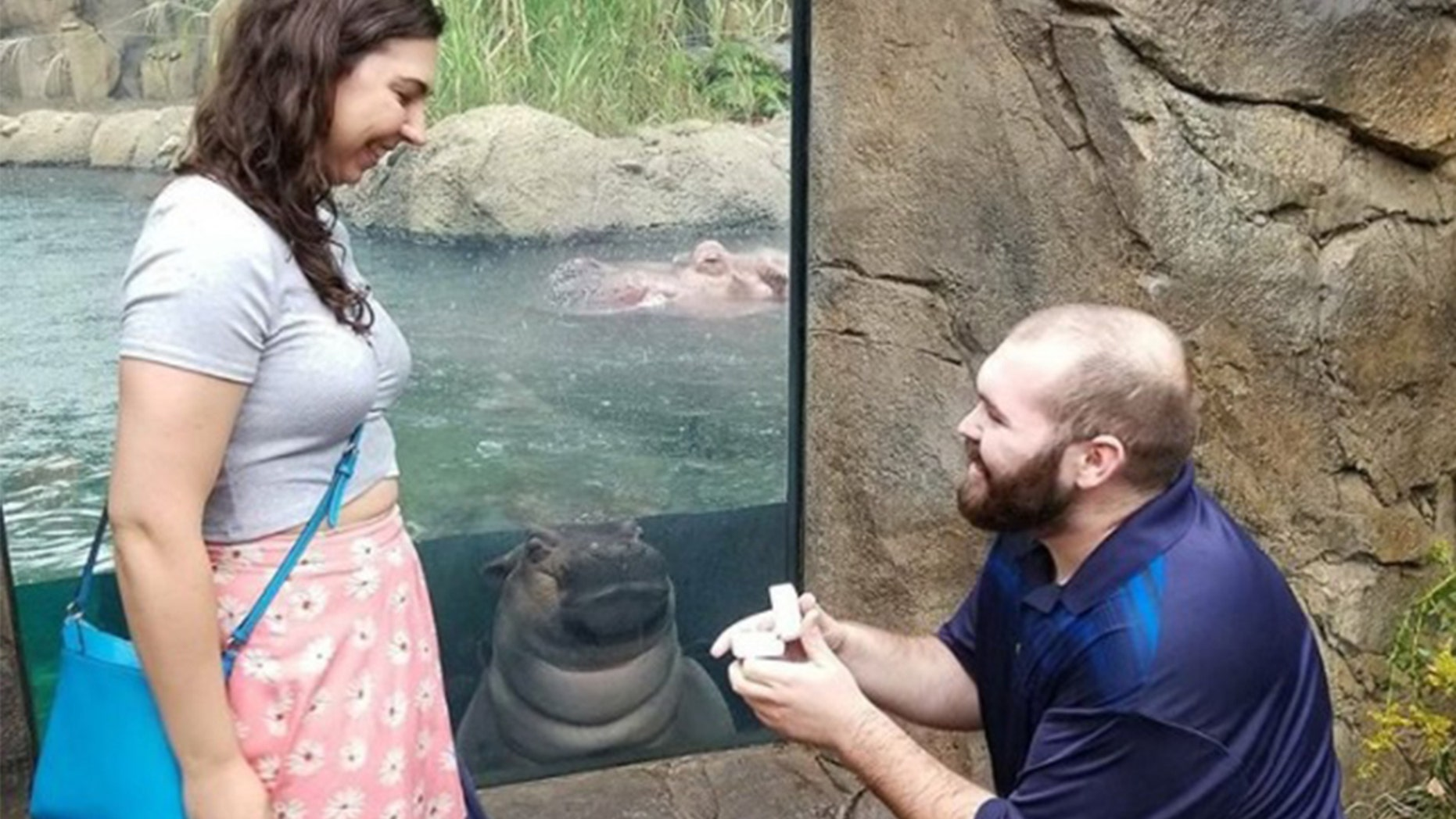 One couple was in for a surprise when Fiona the hippo photobombed their engagement pics