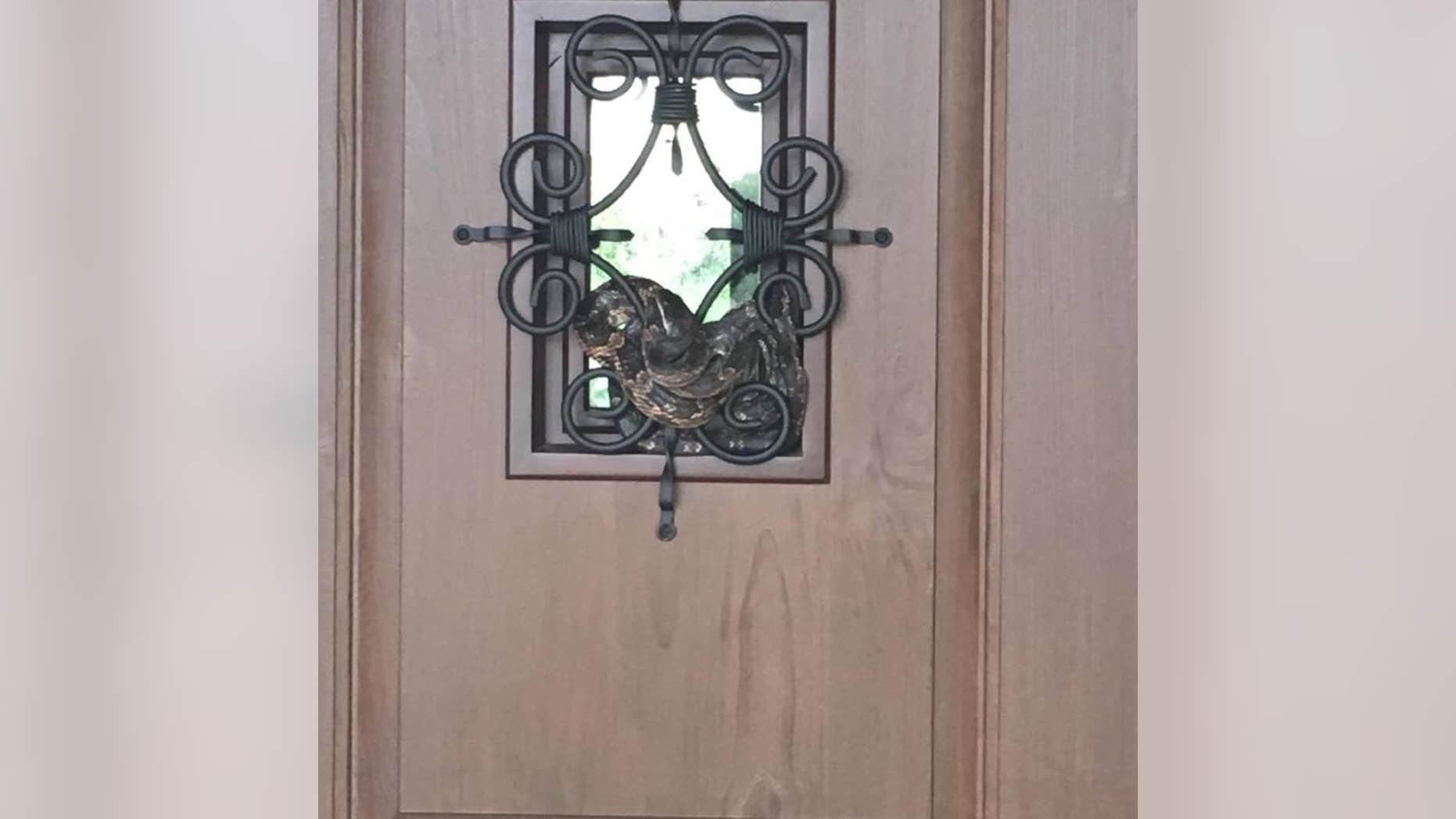 A 7-foot Texas rat snake wraps itself around a front door grille.