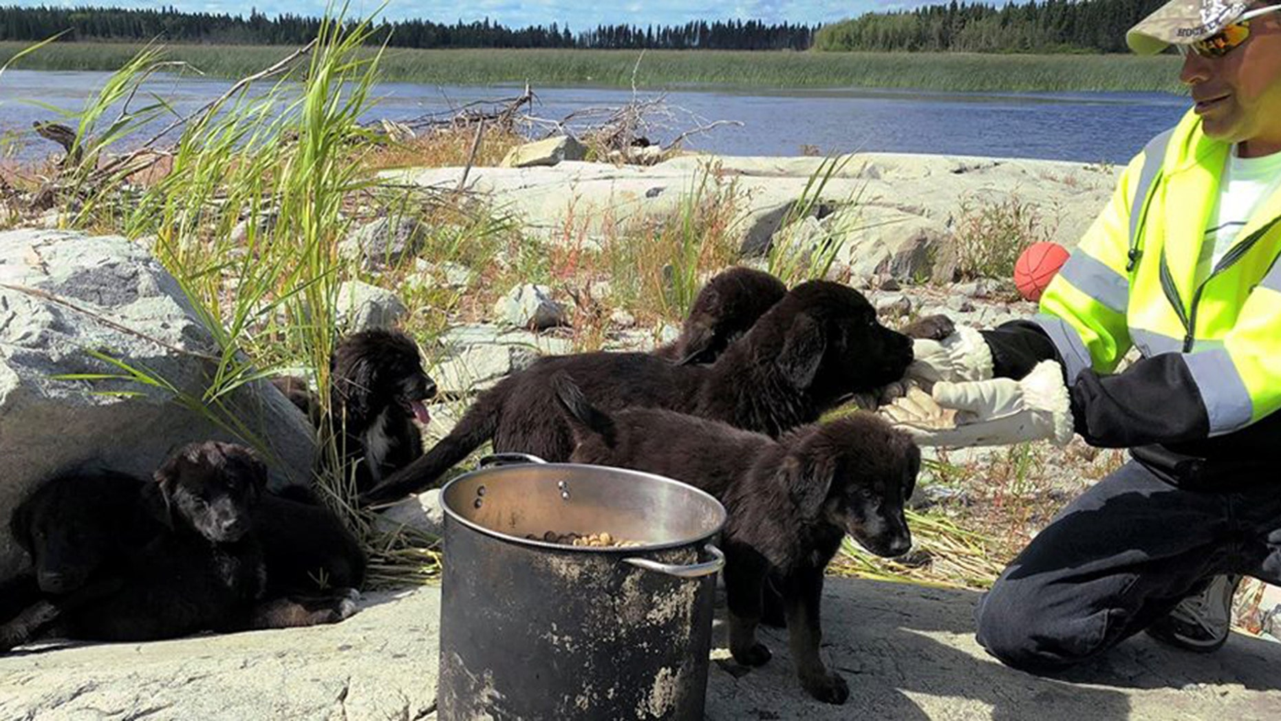 Seven puppies found on a remote island in Canada this week were to be transferred to an animal rescue facility, officials said.