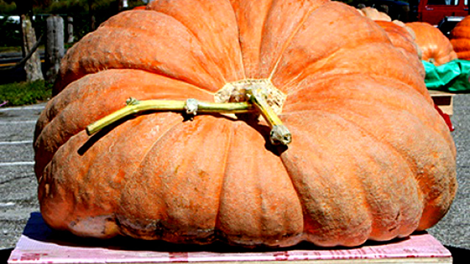 Super-sized pumpkins are attracting attention as scientists work with growers to make them even larger.