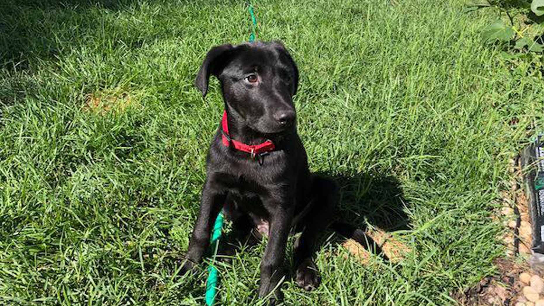Calvin, a 4-month-old black Labrador, met his new family -- the wife and children of fallen Master Sgt. Christopher Raguso, an Air National Guard airman from Long Island, N.Y.