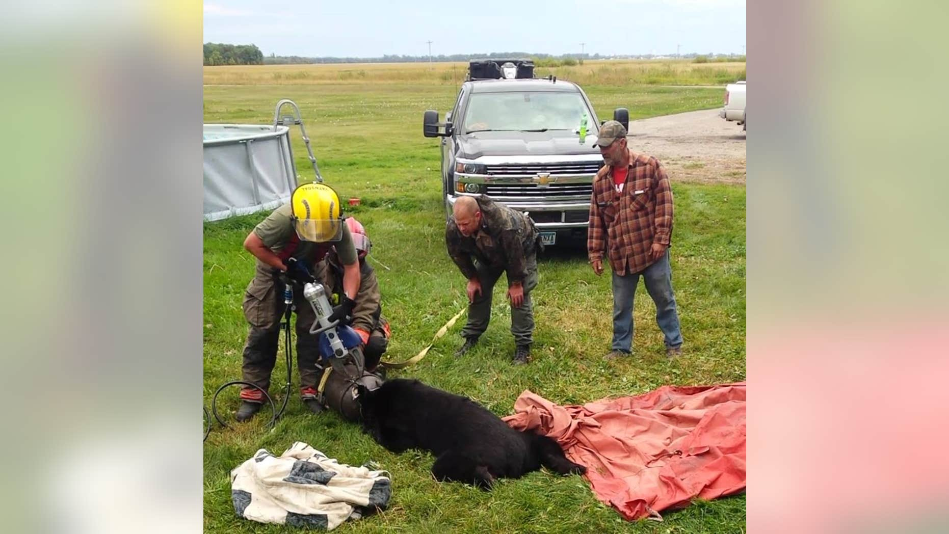 Firefighters in northern Minnesota recently came to the rescue of a black bear after he got his head stuck in a 10-gallon milk jug.