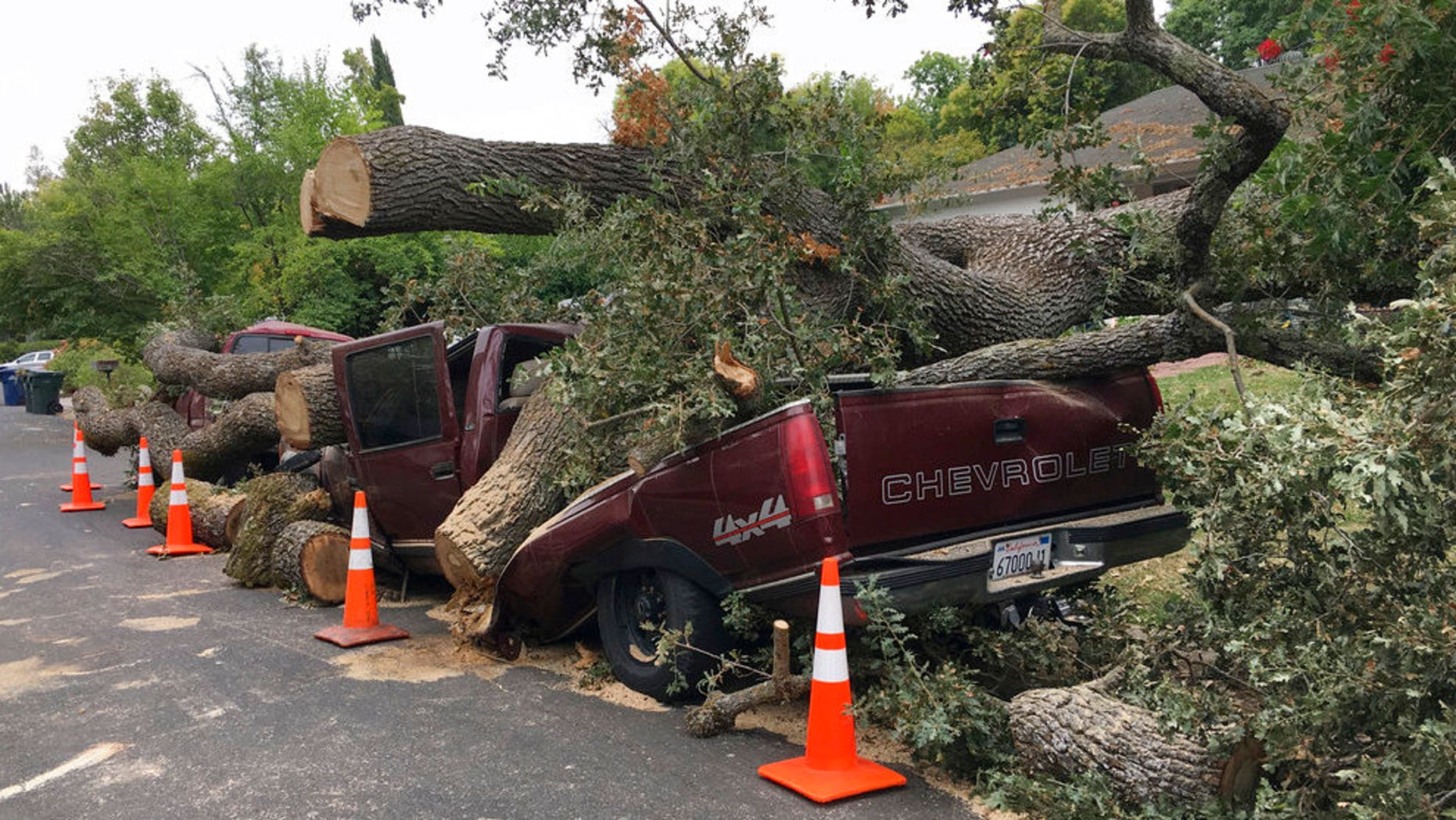 A centuries old massive oak tree came crashing down and crushed this truck after collapsing in a neighborhood in Pleasant Hill, Calif., Thursday, Aug. 30, 2018. Several parked vehicles were destroyed when the tree fell overnight. (Rick Hurd/East Bay Times via AP)