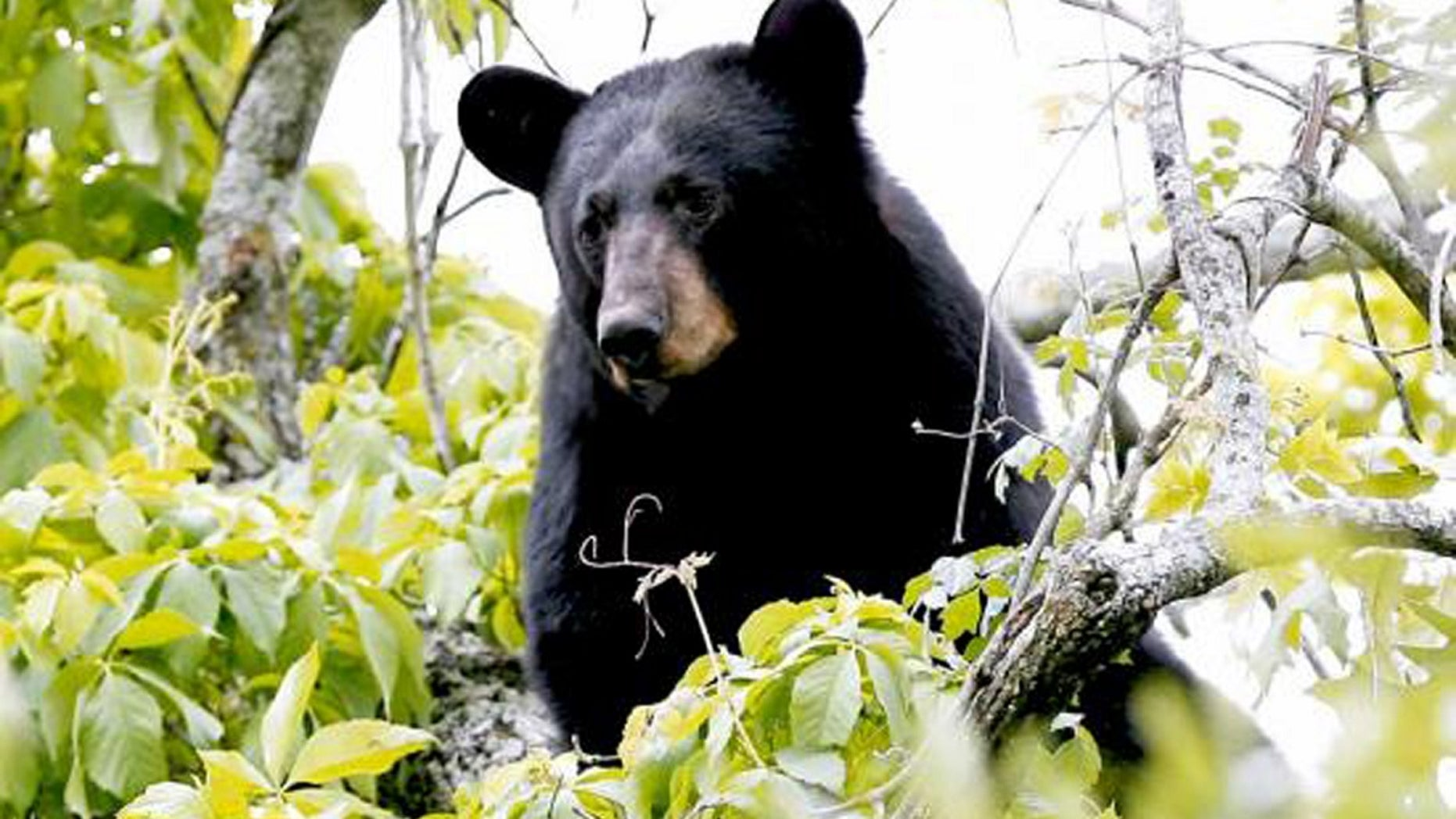 A Florida man came home recently to find a black bear at his doorstep. A bear is seen in a file photo.