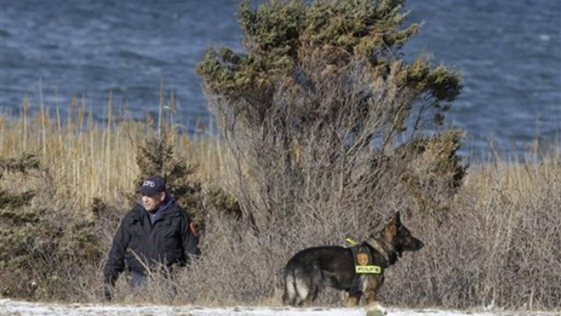 Dec. 14: New York police search brush by the side of the road near Babylon, N.Y., in the same area where authorities discovered the bodies of four women.  (AP)