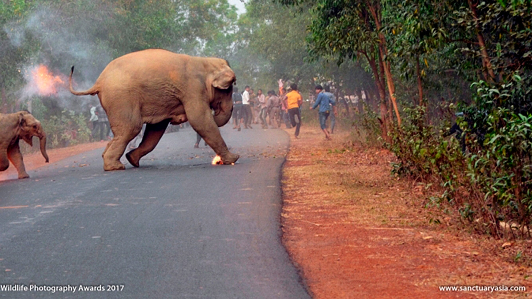 An award-winning image shows the moment two elephants had to run for their lives.