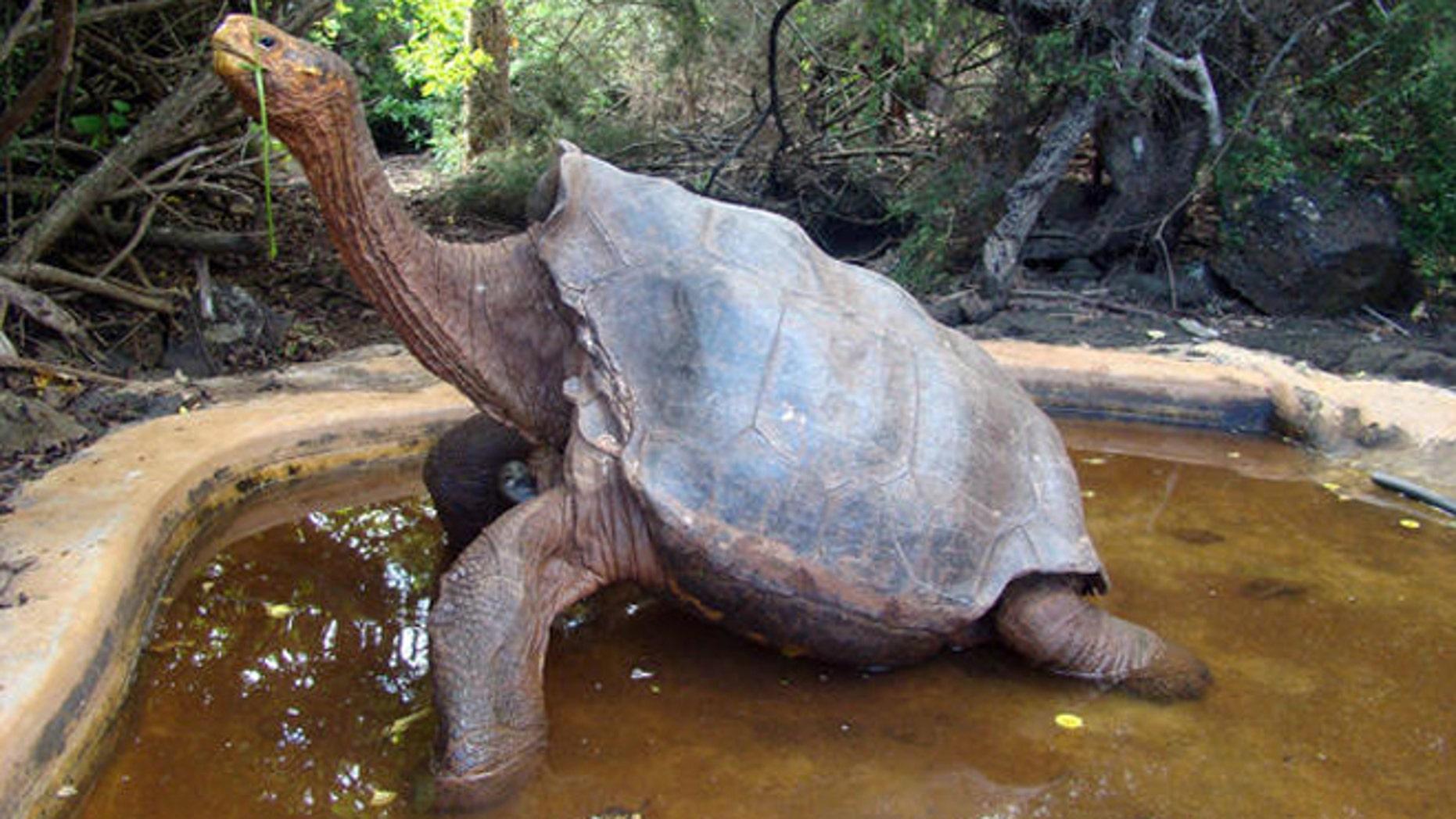 (Galapagos National Park, Associated Press)