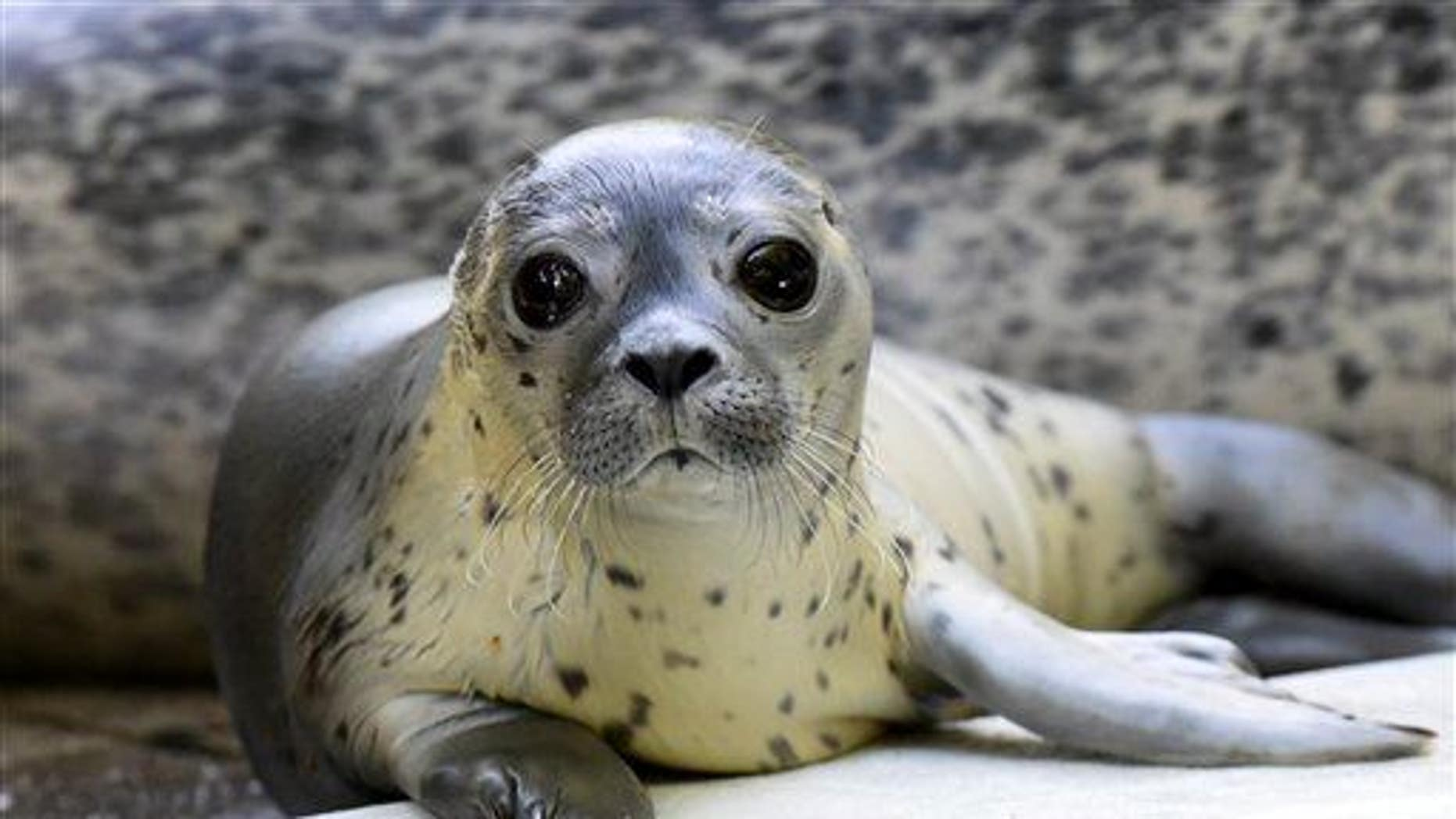 A female sea lion cub, alive, is shown here.