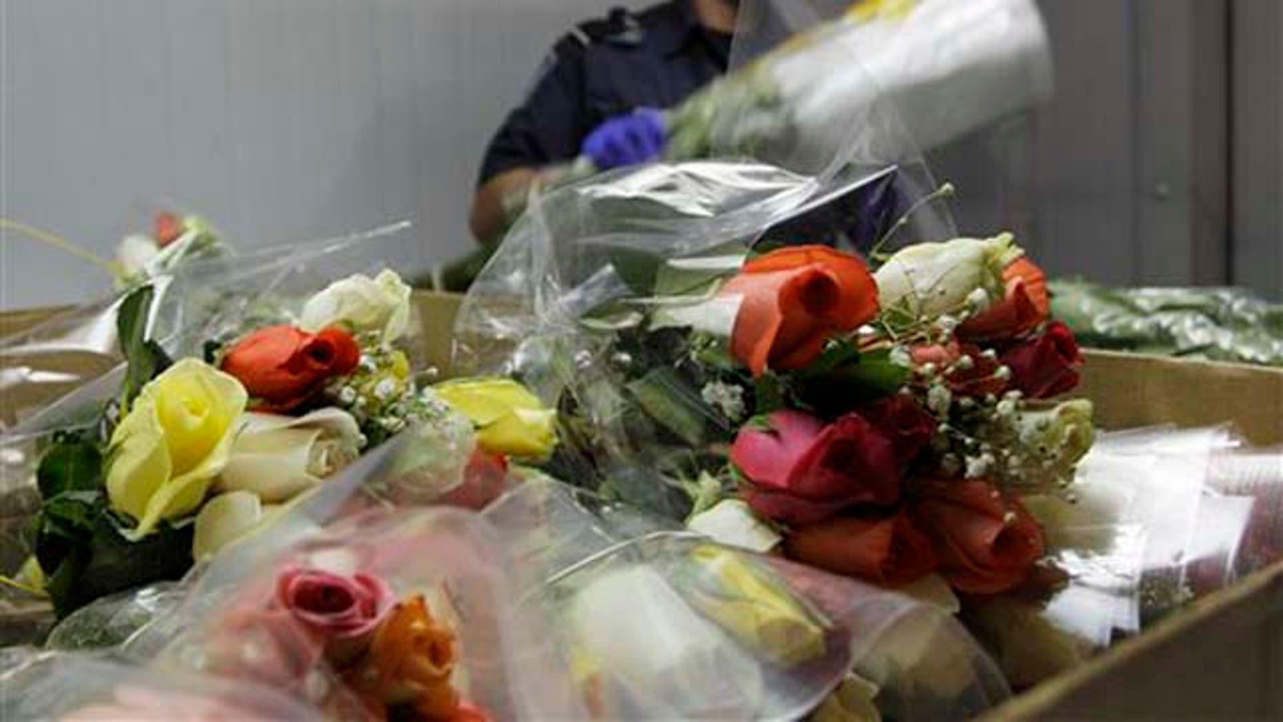 An U.S. Customs agent checks roses Thursday, Feb. 3, 2011 at Miami International Airport.  Amid the peak Valentine's Day flower season, U.S. agents in Miami are working overtime to make sure pretty love bouquets are not used as transportation by exotic South American pests or cocaine traffickers. More than eight out of every 10 cut flowers imported to the U.S. come through Miami International Airport. Colombia and Ecuador are the main sources of imported flowers, with Colombia also a leading cocaine producer.   (AP Photo/J Pat Carter)