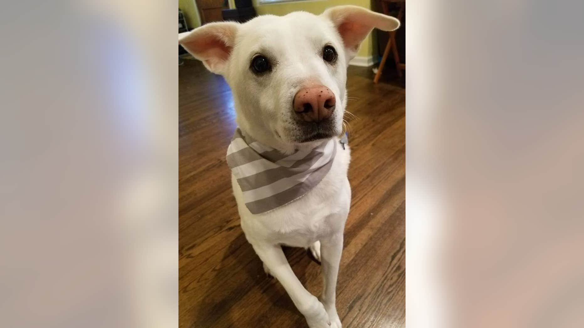 Moses, a lab/shepherd mix, was mistakenly euthanized this week, his family says.