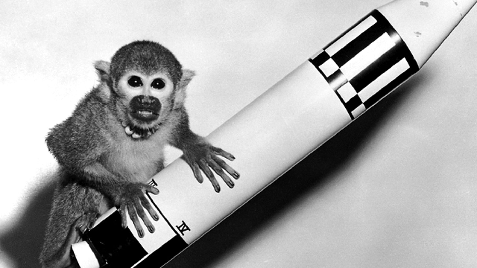 May 29, 1959: Monkey Baker, sent into space on the Jupiter AM-18 rocket, poses on a model of the vehicle.
