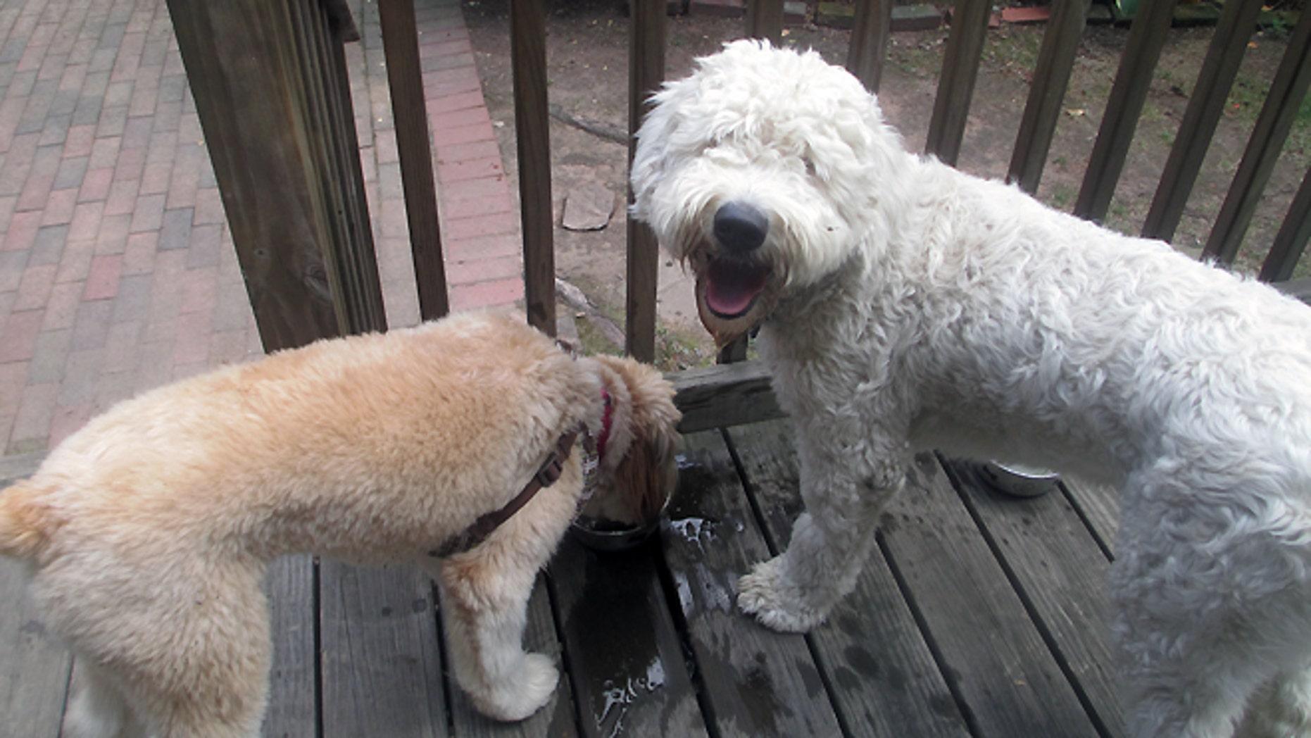Elsie and Brady