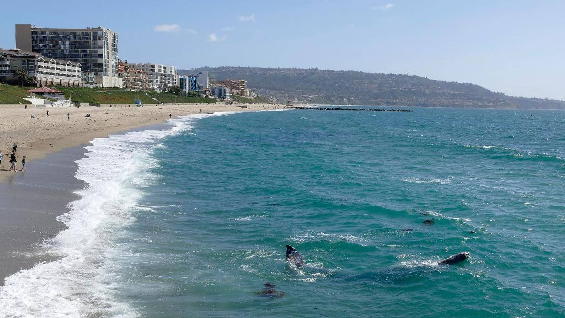 In this March 30, 2016 photo, whales swim by the Redondo Beach Pier in Redondo Beach, Calif. (Brad Graverson/The Daily Breeze via AP)  MAGS OUT; NO SALES; MANDATORY CREDIT