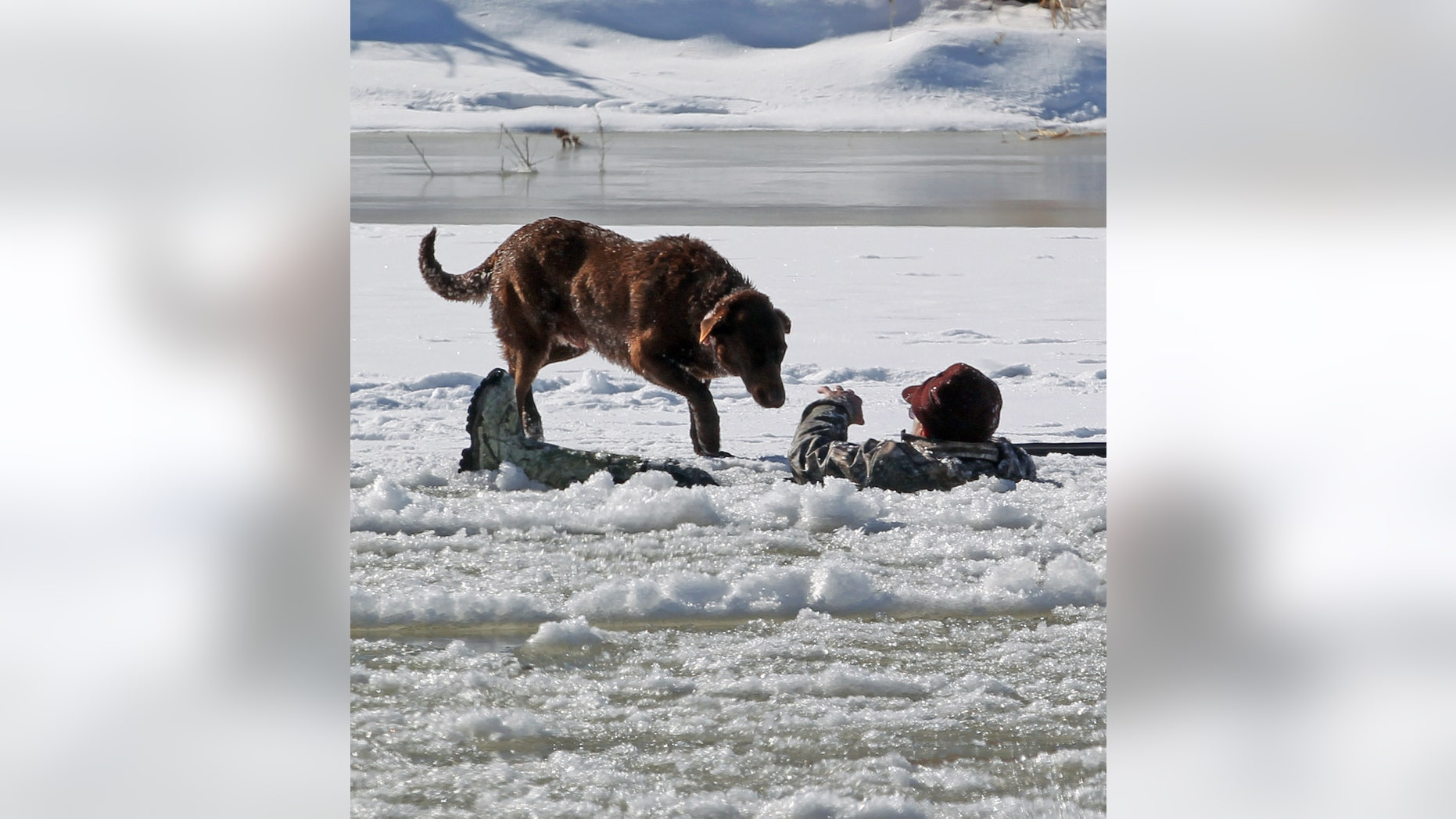 A hunter gestures his dog away today as he waits in the Colorado River for rescue, Tuesday, Jan. 15, 2013 in Mesa County, Colo. The man fell in while retrieving a goose he shot. Grand Junction Fire Department and Lower Valley Fire Department responded to the scene to rescue the man, who reportedly had been in the water for nearly 30 minutes. (AP Photo/The Grand Junction Daily Sentinel, Dean Humphrey) MANDATORY CREDIT