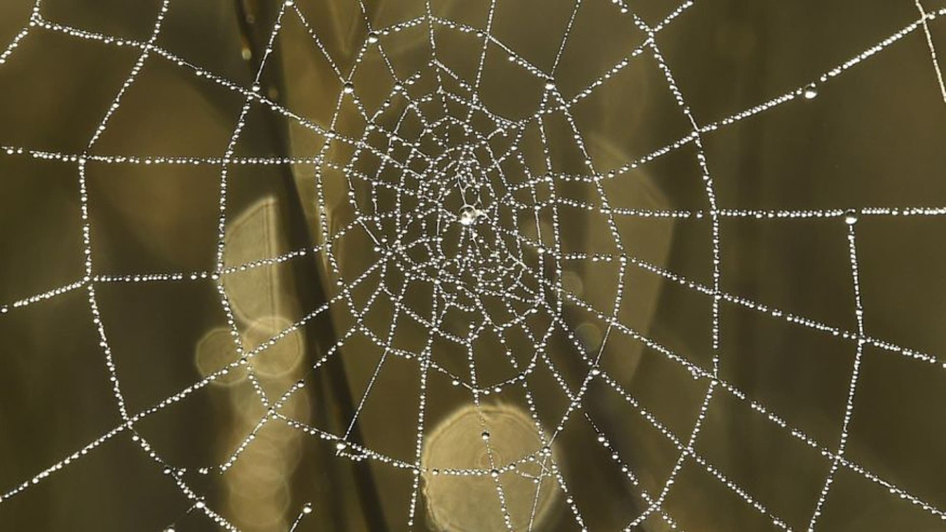 File photo - Dew drops on a spider web reflect the morning sun in Richmond Park in west London, Britain, Oct. 2, 2015. (REUTERS/Toby Melville)