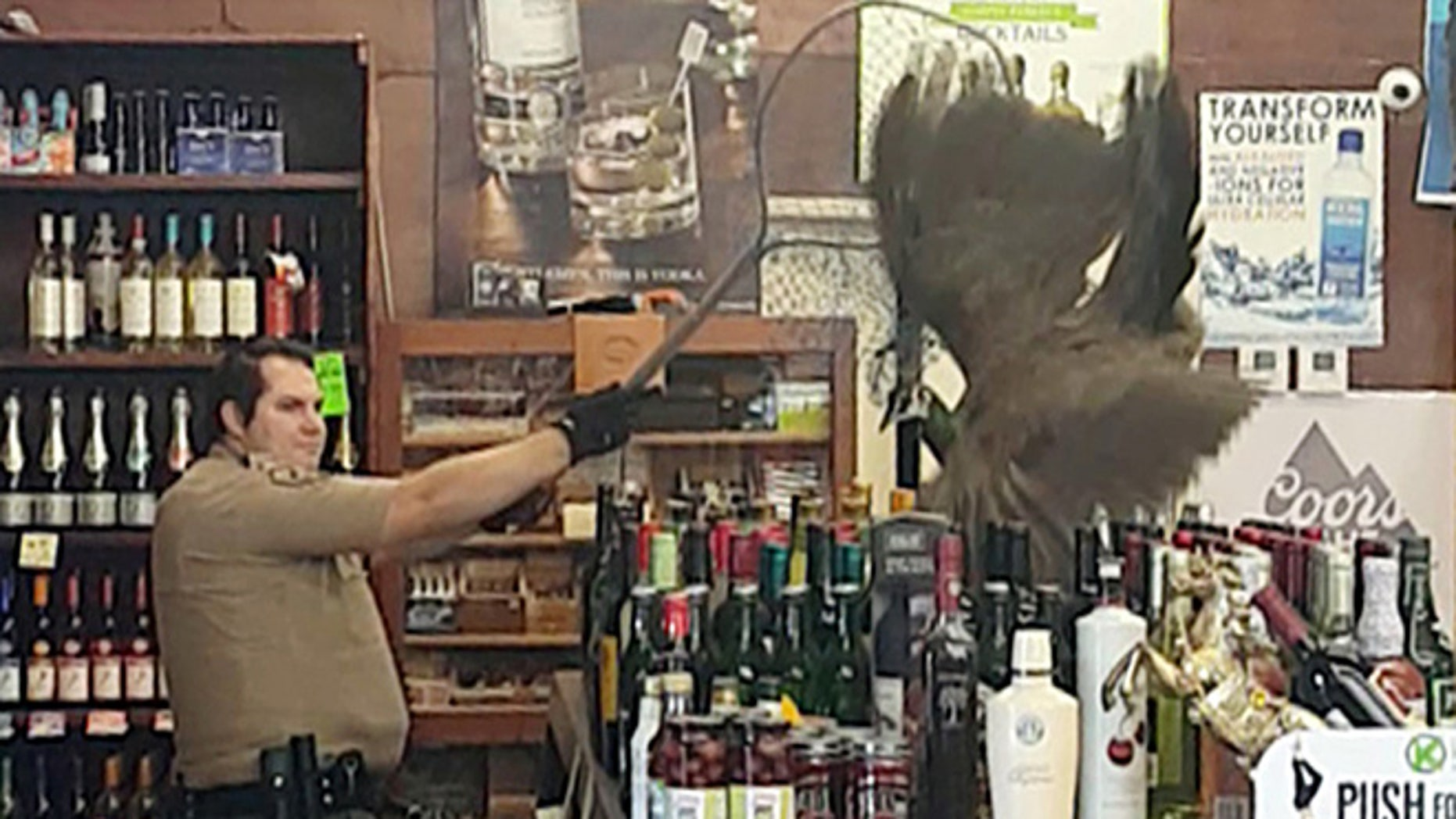 In this Monday, June 5, 2017 image made from cellphone video provided by Rani Ghanem, bottles tumble as an animal control officer attempts to net a female peacock that wound up inside the Royal Oaks Liquor Store in Arcadia, Calif.