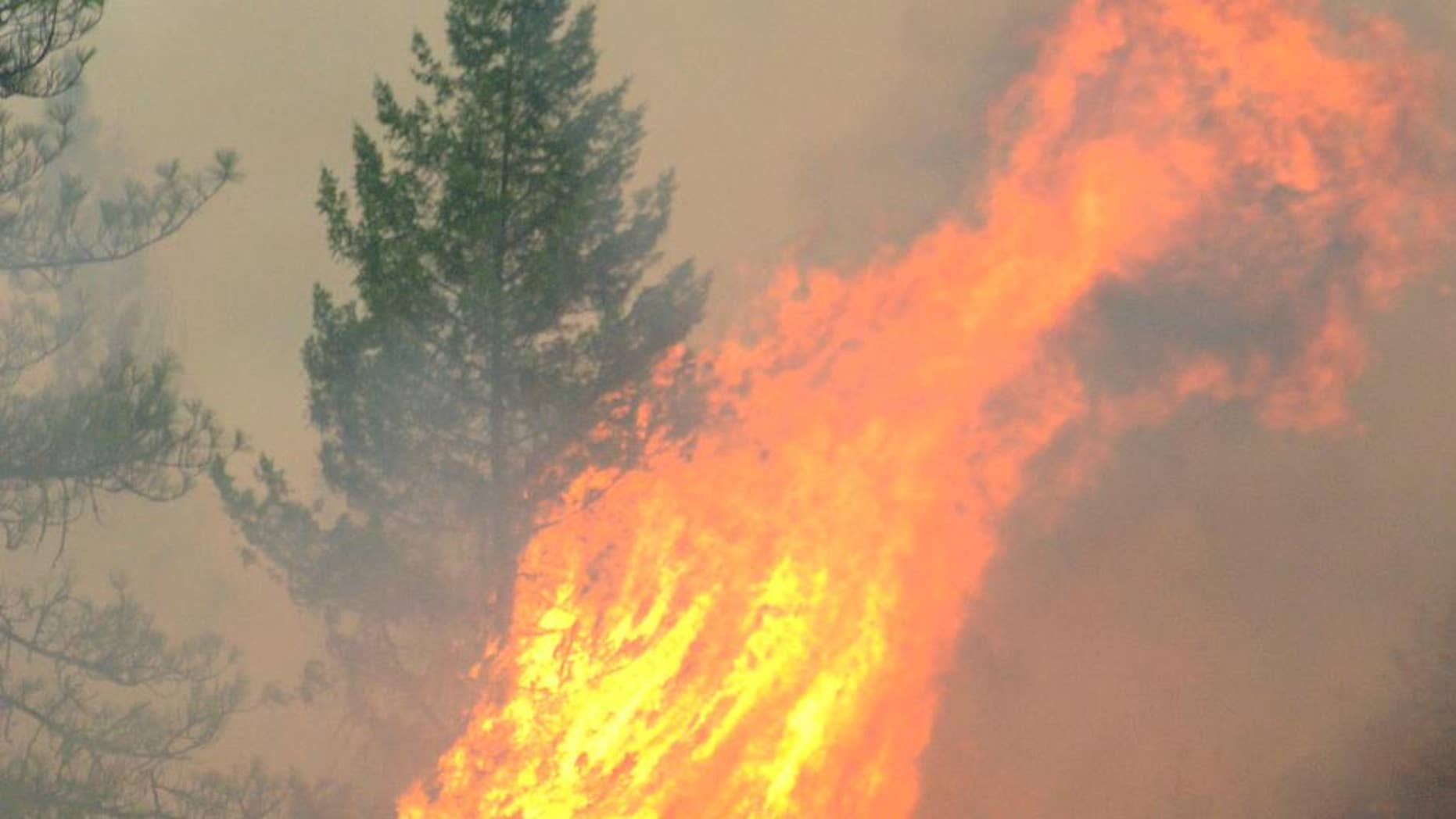 Fire consumes trees along the Clearwater River in north central Idaho on Saturday, Aug. 15, 2015, part of the Lawyer complex of wildfires caused by lightning earlier in the week. (Barry Kough/Lewiston Tribune via AP) MANDATORY CREDIT  MBO