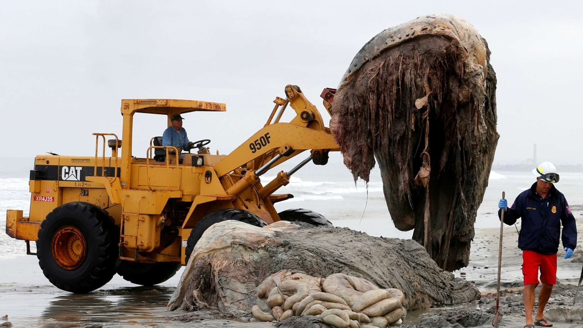 Several giant, hairy creatures have washed up in the Philippines in recent years.