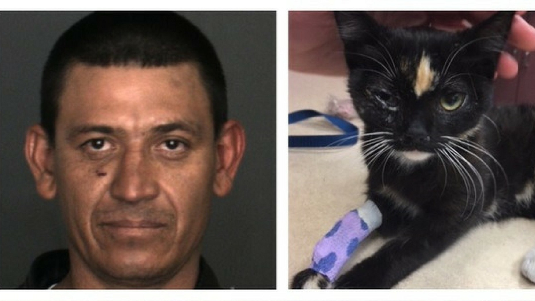 Lucio Lopez, 34, was arrested after allegedly throwing a kitten in a freezer and then off a balcony, police said.