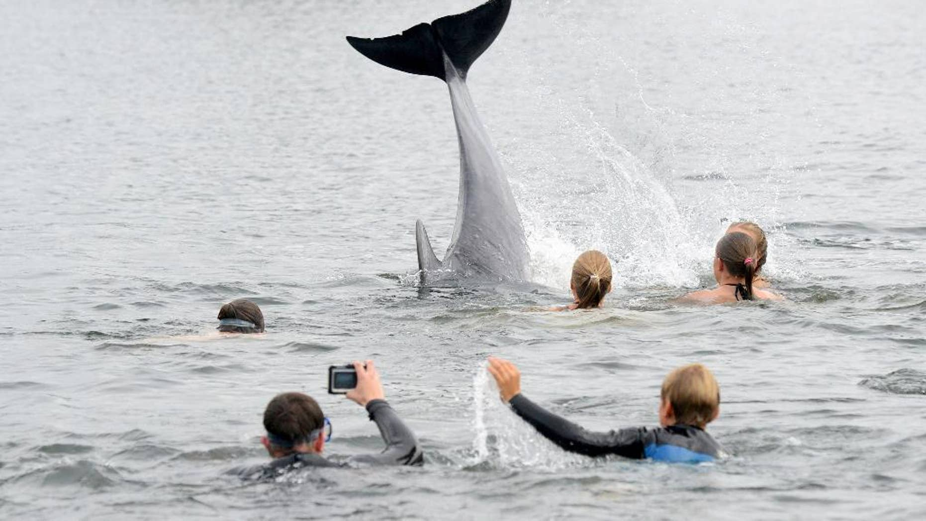 In this Sept. 11, 2016 picture  people take pictures of a dolphin  near Kiel, Germany. The dolphin is delighting bathers in northern Germany, but authorities are warning people not to get too close to the animal. The mammal appeared in Kieler Foerde inlet several days ago and has been swimming in and out of a canal that connects the Baltic Sea to the North Sea. Bathers have been swimming out to touch the dolphin, but police are warning that the animal may feel harassed by this and that swimmers mustn't get in the way of ships using the canal.  ( Thomas Eisenkraetzer/dpa via AP)