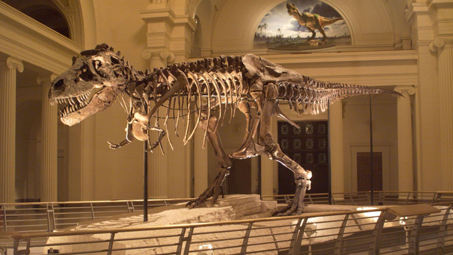 SUE the dinosaur's forearm came to the Advanced Photon Source for its most detailed scan ever, which could shed light on why the large dinosaur had such small arms.