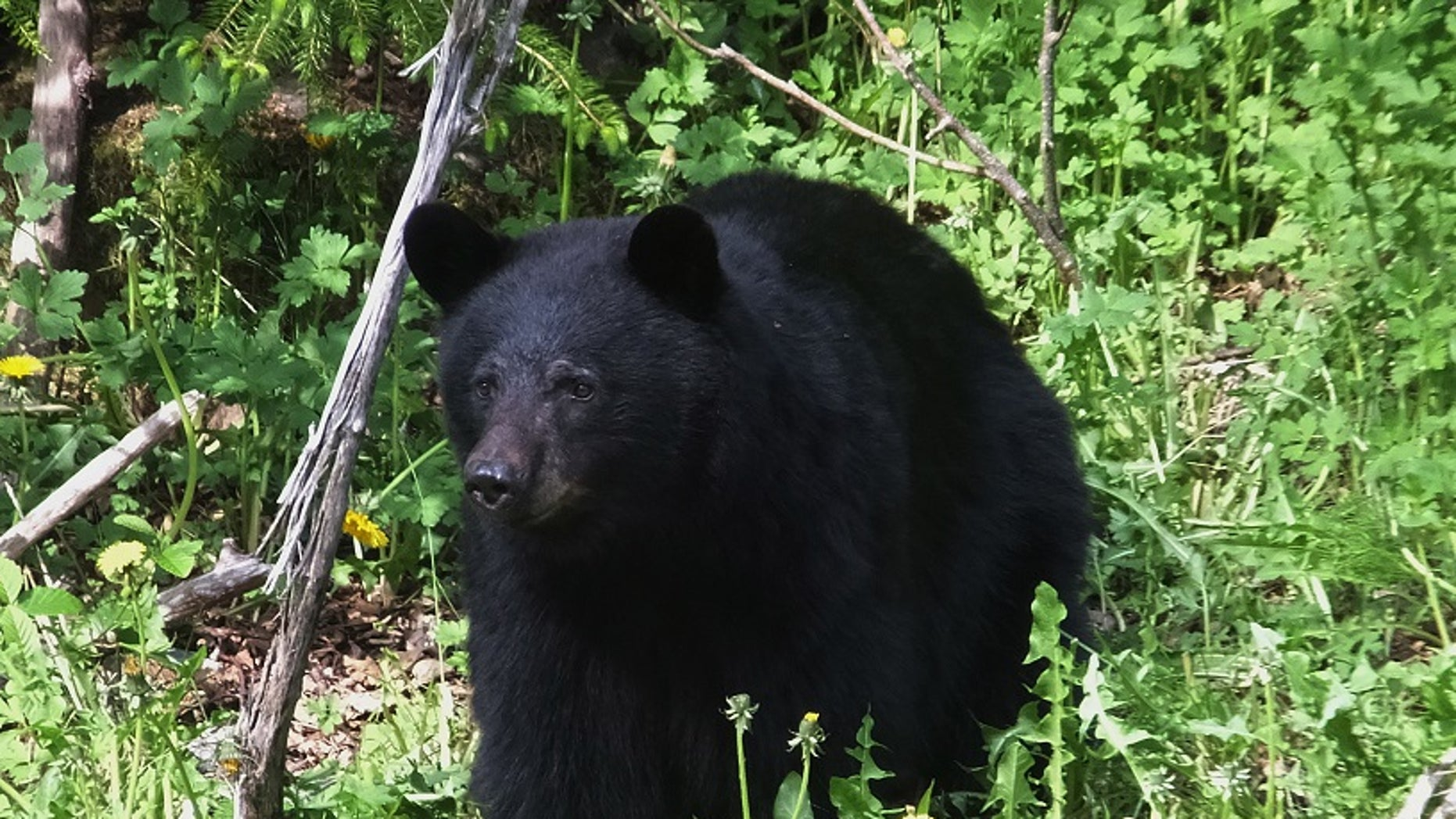 A 16-year-old boy was mauled to death by a black bear in Alaska on Sunday while running a mountain race, state troopers said.