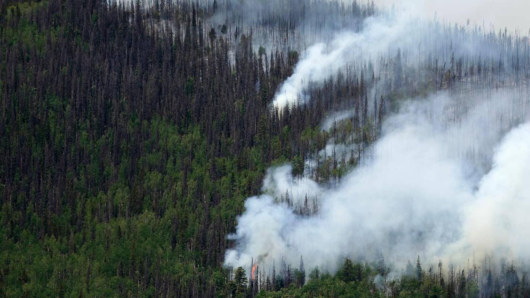 FILE - In this June 24, 2013 file photo, fire-promoting beetle-killed trees mix with live trees as a wildfire burns west of Creede, Colo.