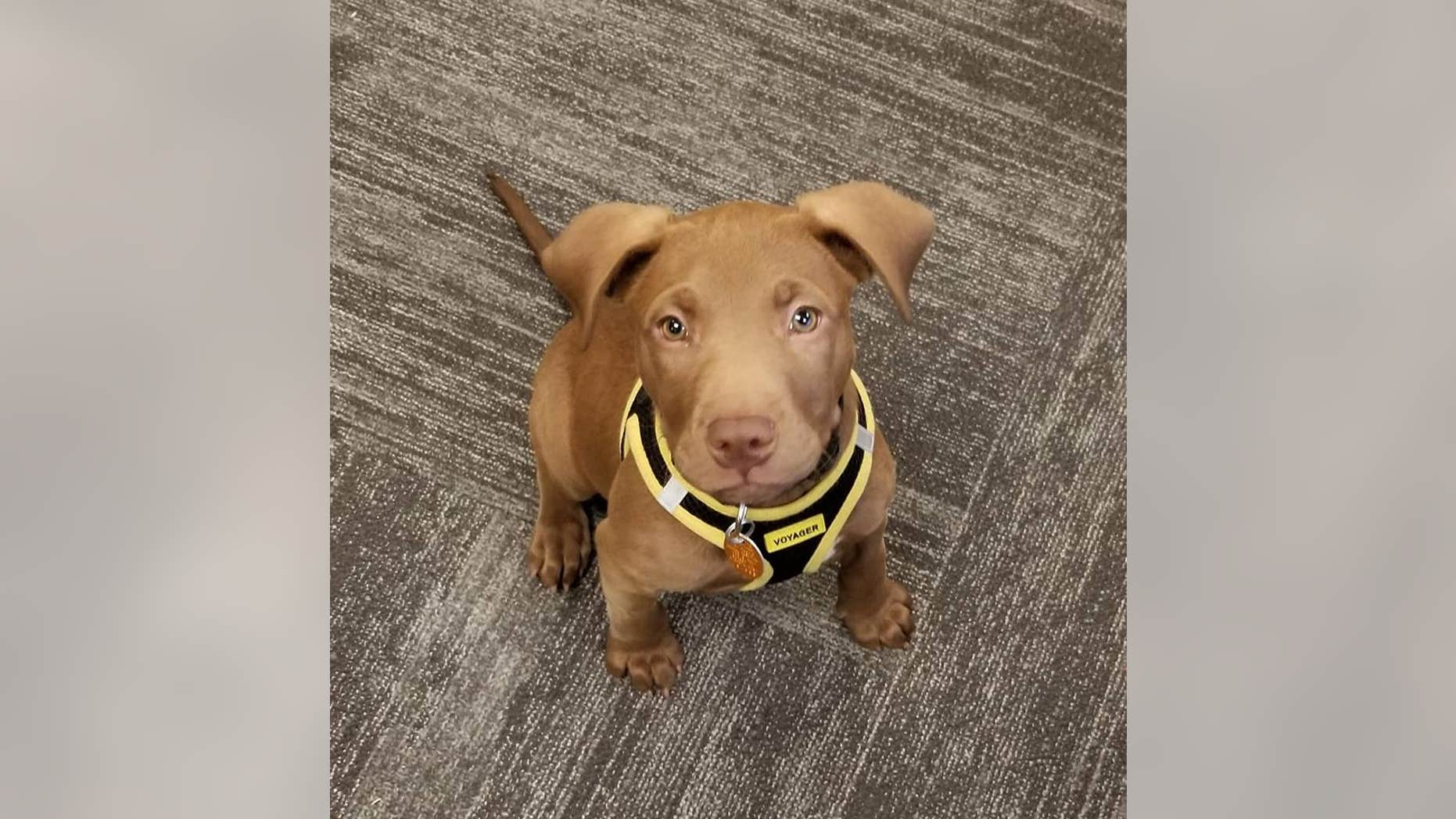 "The puppy, named Squelch, was rescued from the City of Borger Animal Shelter and is now receiving ""24/7 around the clock love and care"" from dispatchers, the city said."