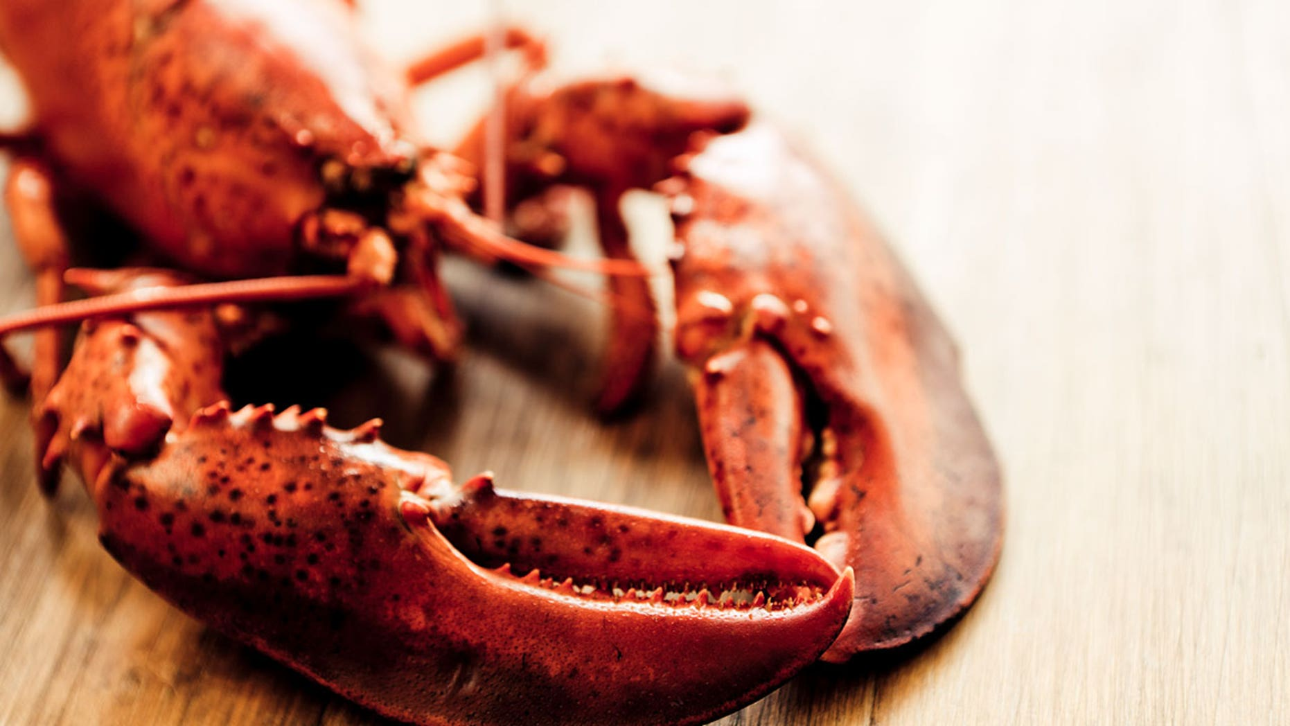 An extremely old Long Island lobster was recently saved from becoming dinner.