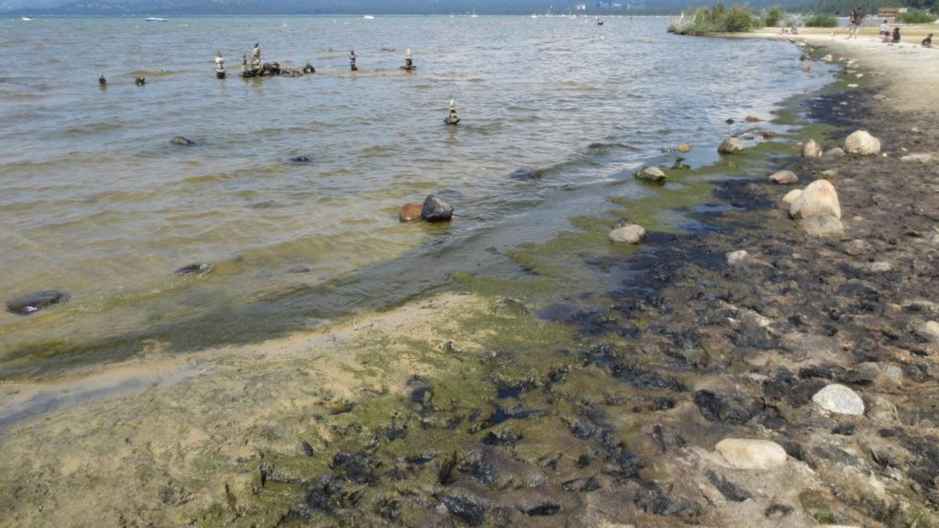 In this Aug. 2014 photo, algae growing along the south shore of Lake Tahoe is seen at Regan Beach in South Lake Tahoe, Calif. The UC Davis Tahoe Environmental Research Center is seeking personal photographs of shore-side algae in past decades to supplement limited scientific data about historic algae growth in the mountain lake. (Scott Hackley/UC Davis Tahoe Environmental Research Center via AP)