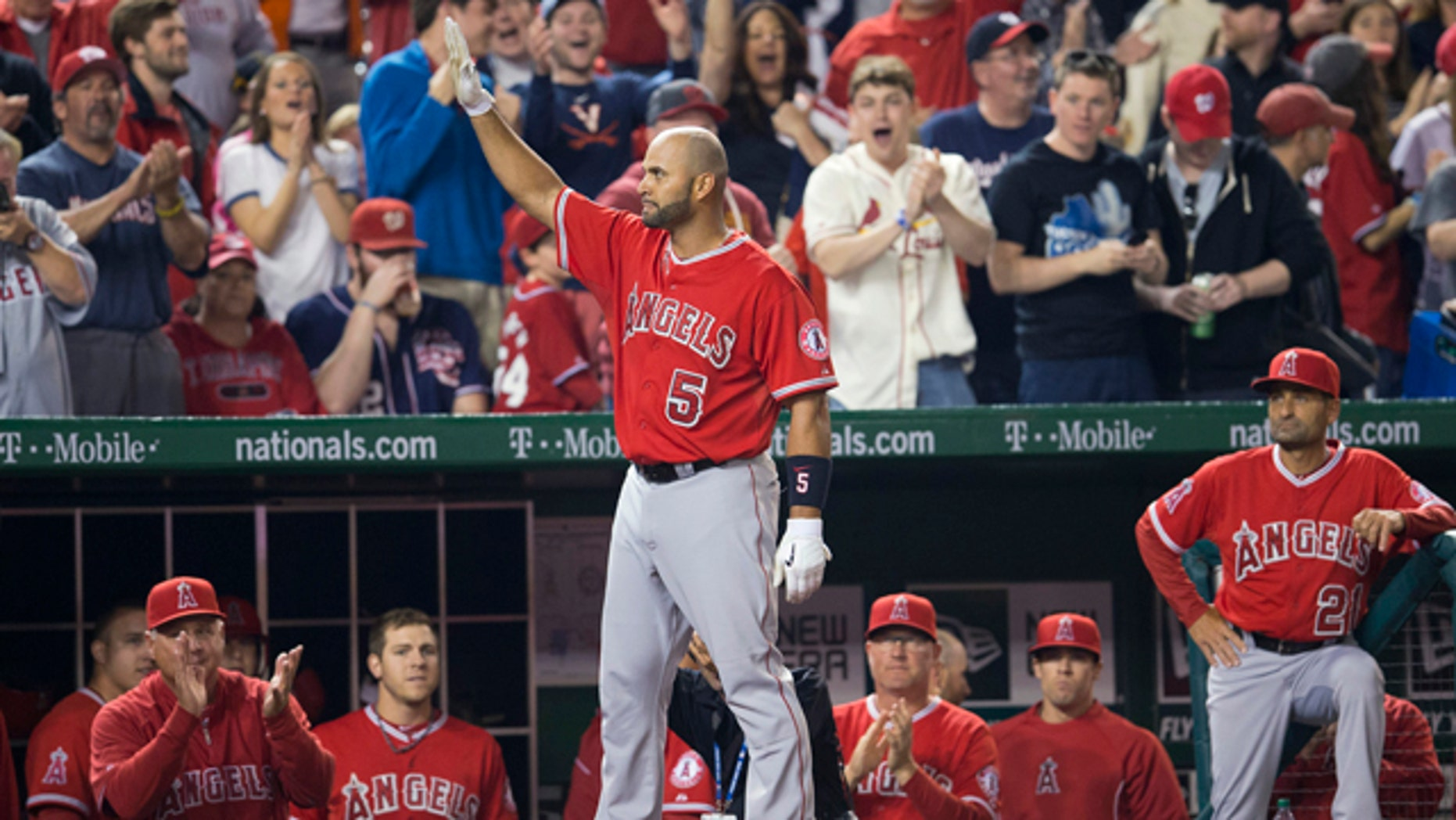 April 22, 2014: Albert Pujols (5) steps out of the visitors' dugout to acknowledge the applause from the crowd after hitting his 500th career home run off the Washington Nationals' Taylor Jordan in the fifth inning of the Los Angeles Angels' 7-2 win. (AP)