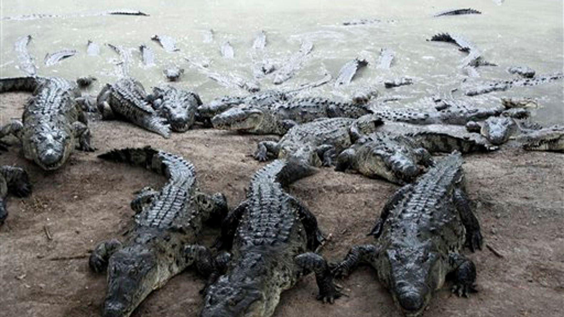 A prison guarded by crocodiles is reportedly under consideration in Indonesia.