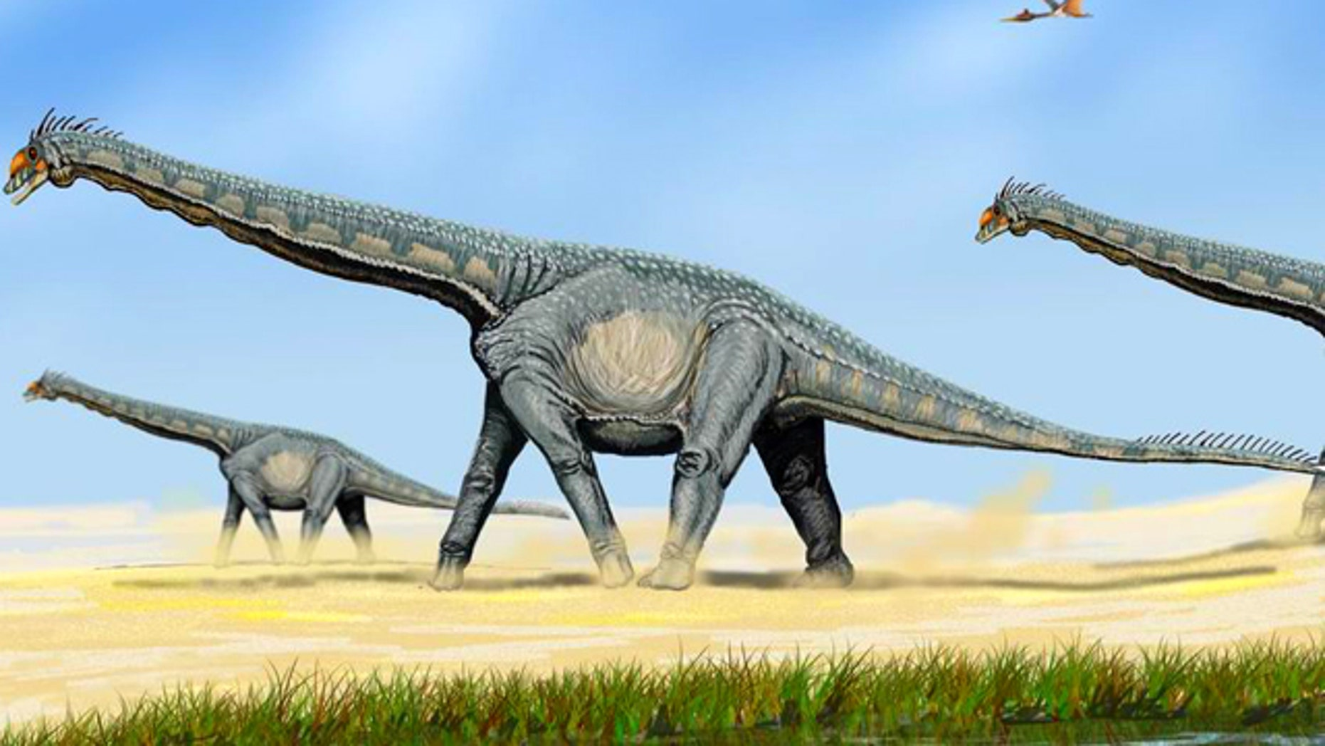 Alamosaurus, a member of the Sauropod family of giant, plant eating dinosaurs that roamed the planet tens of millions of years ago.