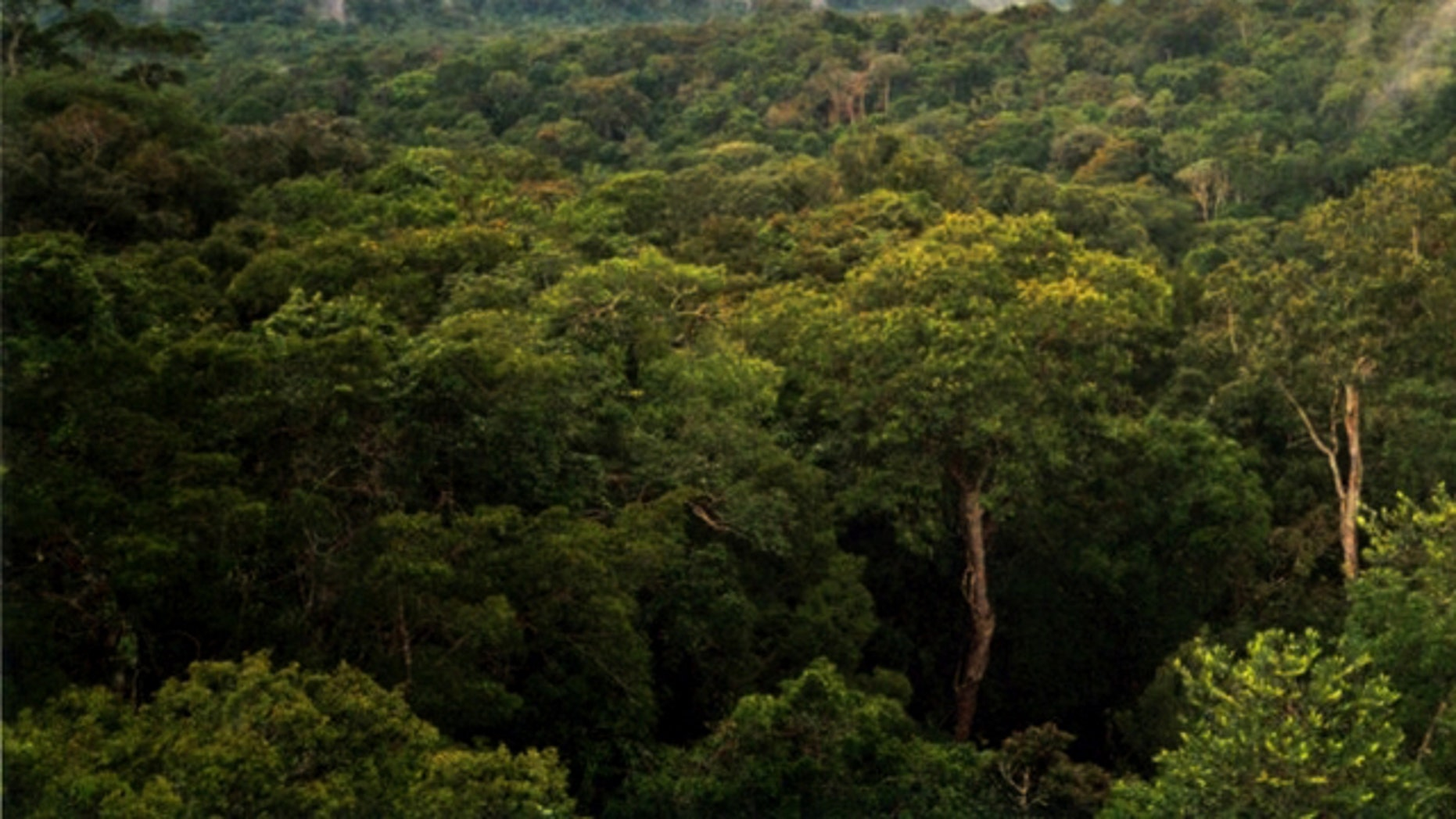A view of the Amazon basin forest north of Manaus, Brazil. A U.N. report stated that global warming is threatening the forests -- a statement that was recently discredited.