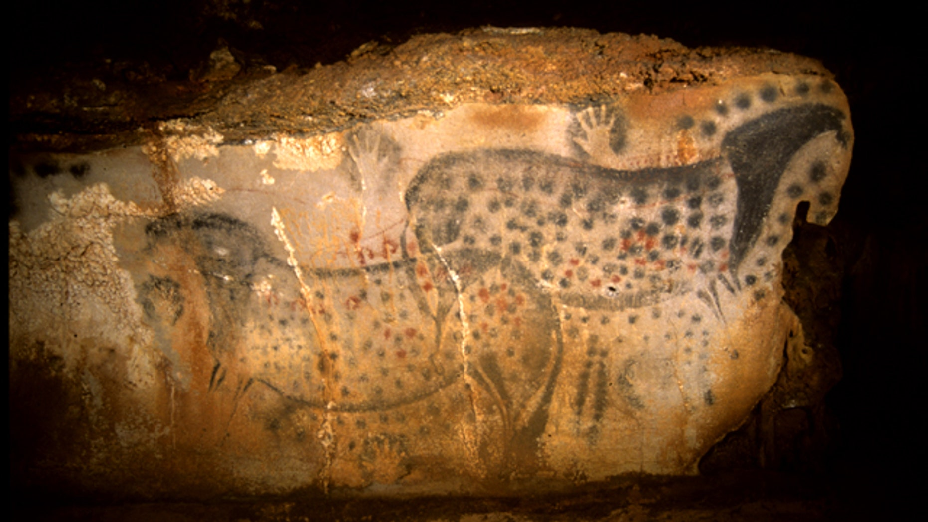 This undated photo provided by the Pech Merle Prehistory Center shows a cave painting of pair of spotted horses, found in the Pech Merle Cave in Cabrerets, southern France. Scientists estimate the drawing, measuring about 4 meters wide by 1.5 meters high, is about 25,000 years old.