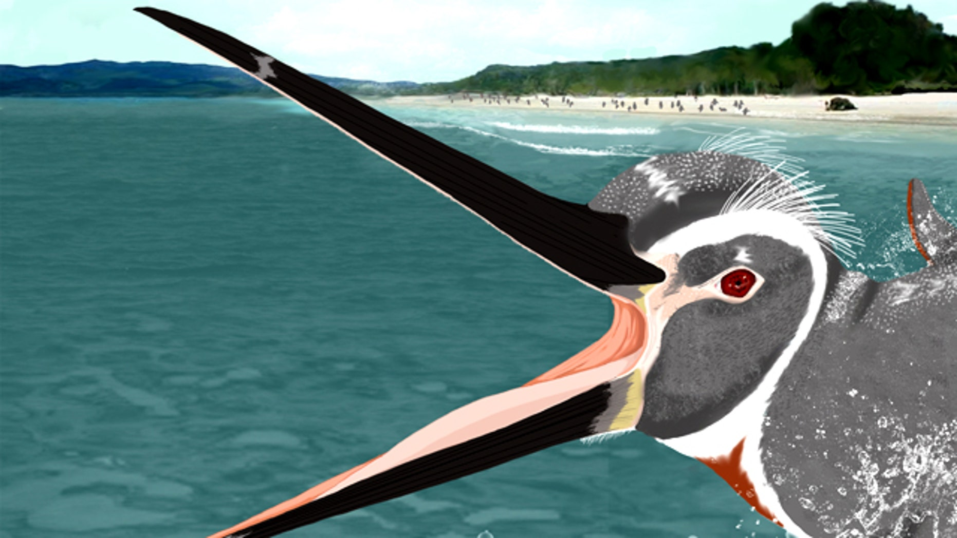 An artist's reconstruction of Inkayacu paracasensis -- a giant, colorful penguin relative.