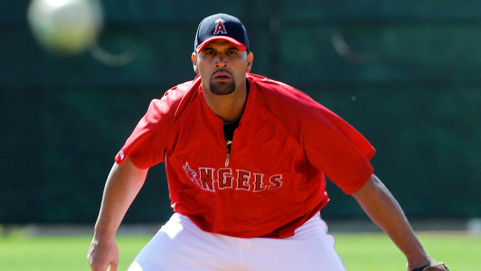 Albert Pujols fields a ground ball during a baseball spring training workout Friday, March 2, 2012, in Tempe, Ariz. (AP Photo/Morry Gash)